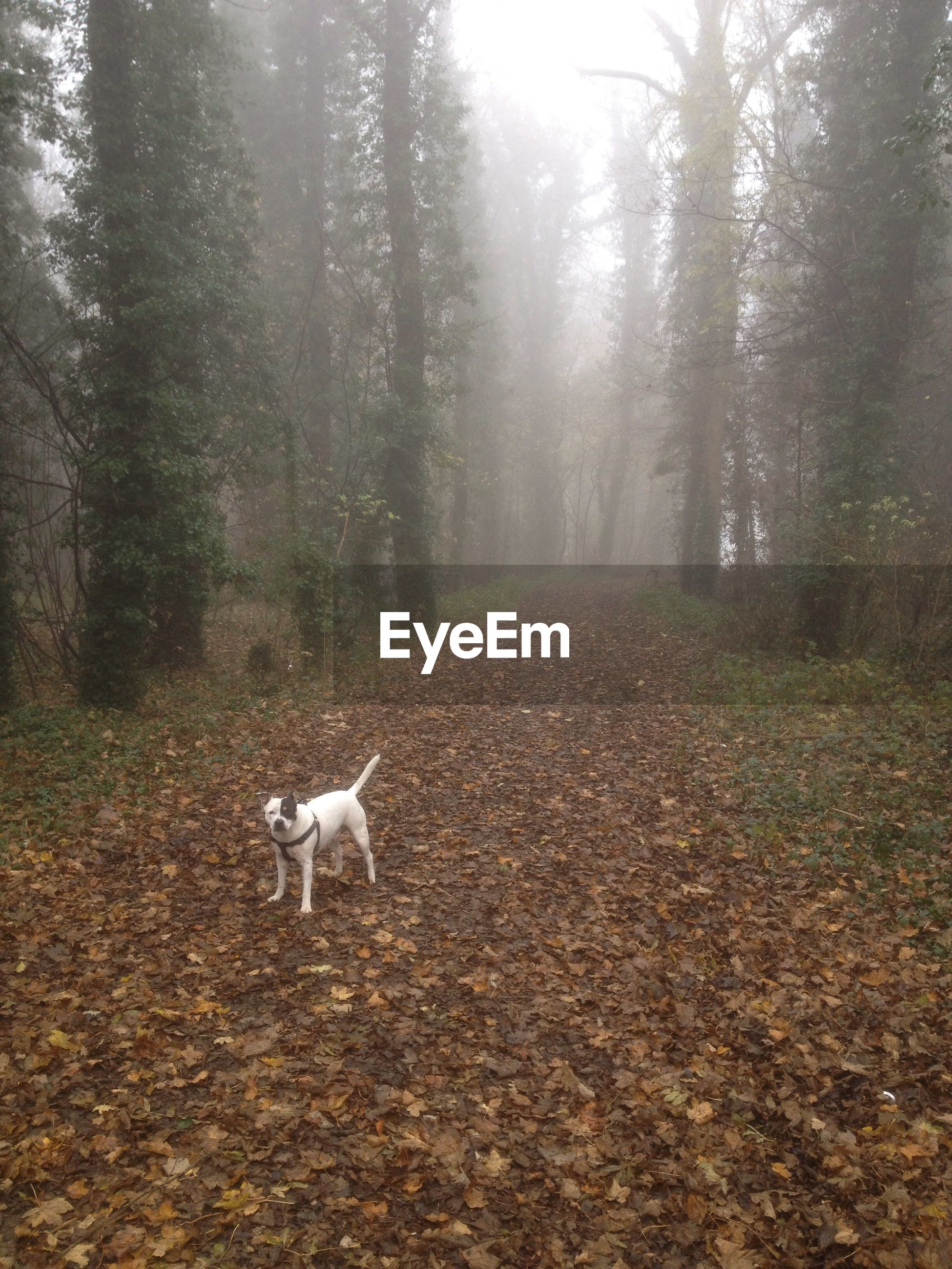 Dog outdoors in a foggy autumn day