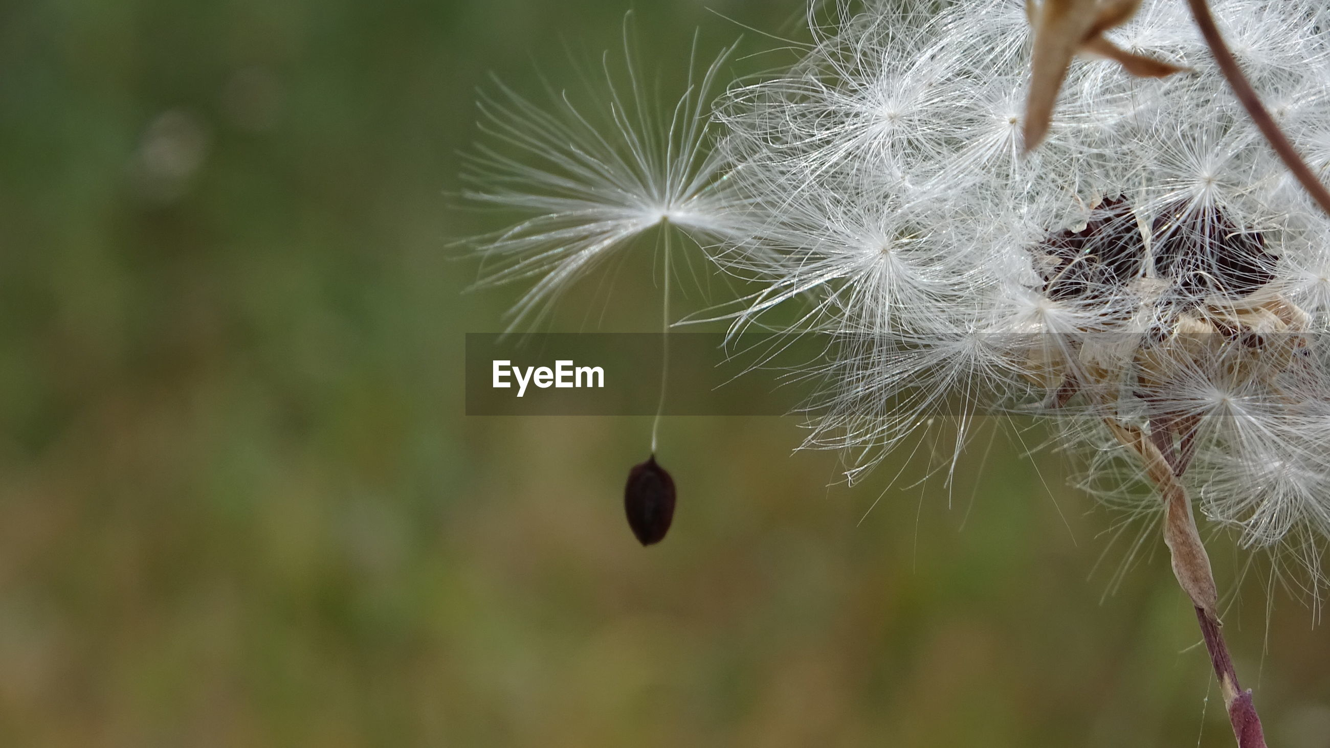 Seed leaving the flower. when you realize it's time to say goodbye in order to start a new life...