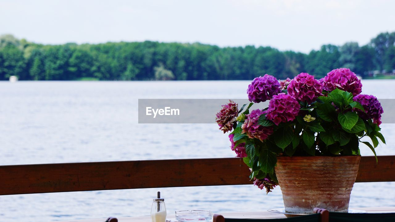 flower, beauty in nature, nature, water, no people, freshness, fragility, focus on foreground, day, plant, vase, table, growth, sea, outdoors, pink color, close-up, flower head, sky, bouquet