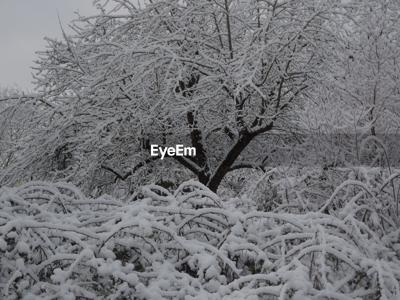 nature, winter, cold temperature, outdoors, no people, tranquility, snow, day, beauty in nature, branch, tree, close-up