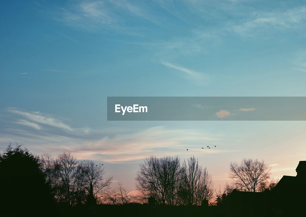 sky, tree, silhouette, nature, no people, bare tree, sunset, outdoors, beauty in nature, scenics, flying, day