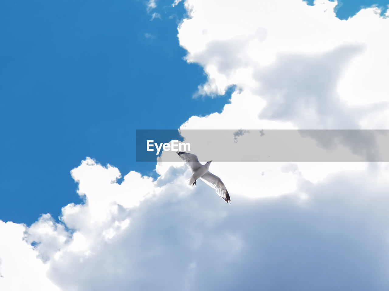 animal wildlife, cloud - sky, flying, animals in the wild, animal themes, sky, low angle view, bird, animal, vertebrate, spread wings, mid-air, one animal, no people, nature, day, seagull, white color, motion, blue, outdoors