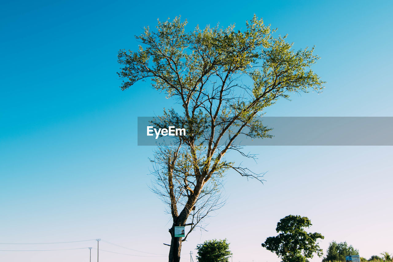 tree, nature, beauty in nature, low angle view, blue, scenics, outdoors, tranquility, clear sky, no people, branch, growth, day, sky