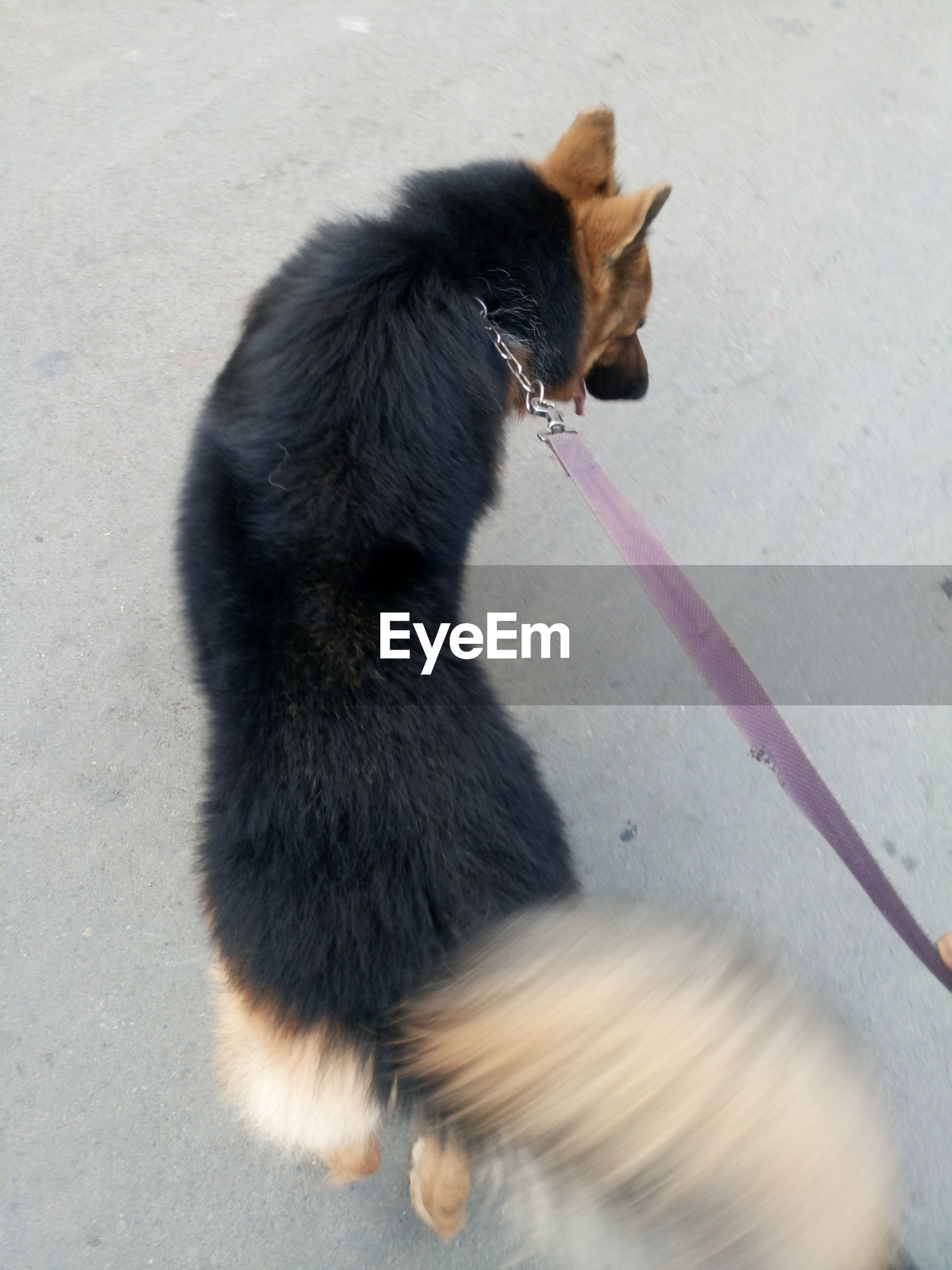 View of dog on leash