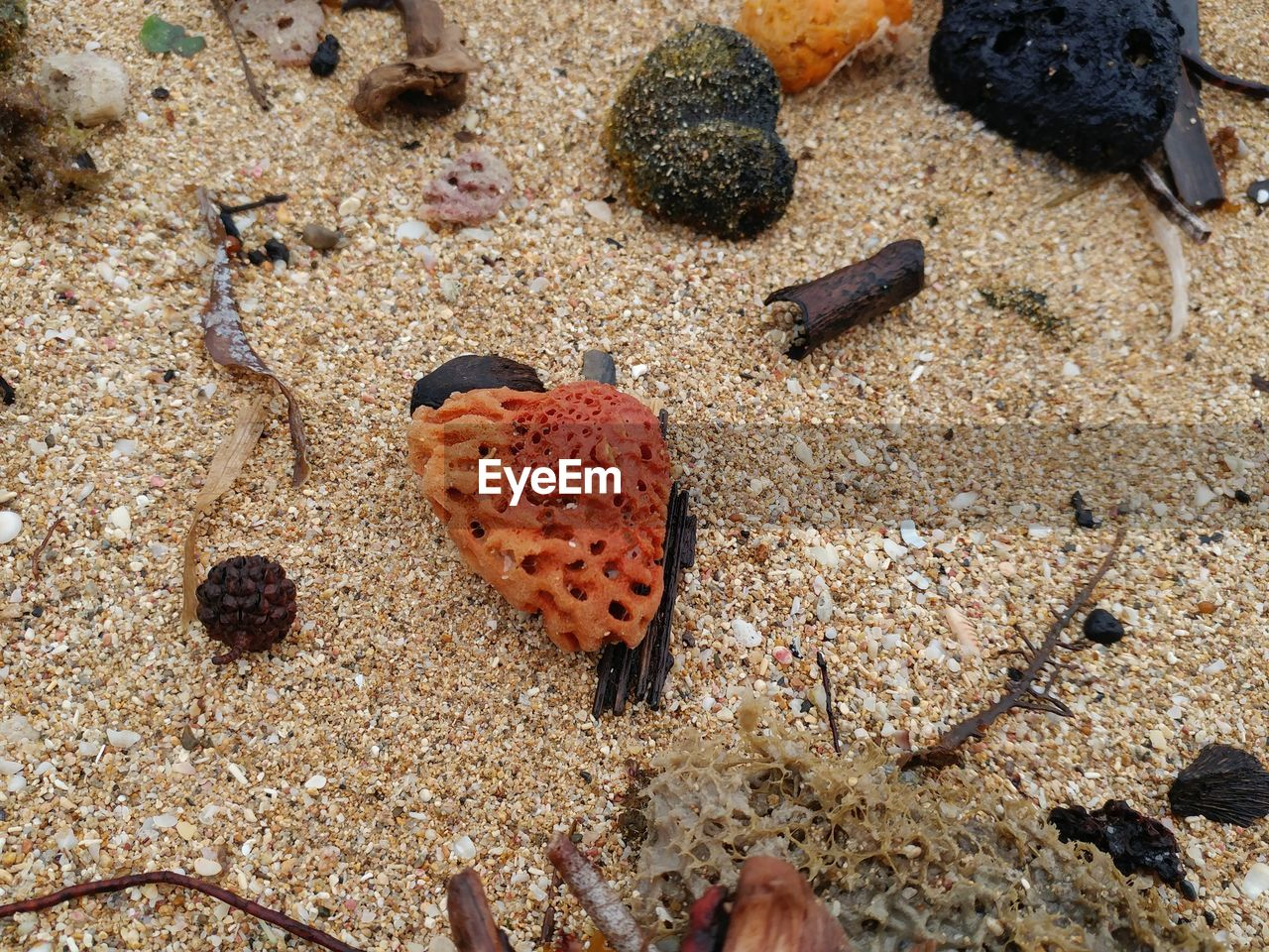 beach, sand, sea life, no people, high angle view, nature, animal themes, day, outdoors, close-up