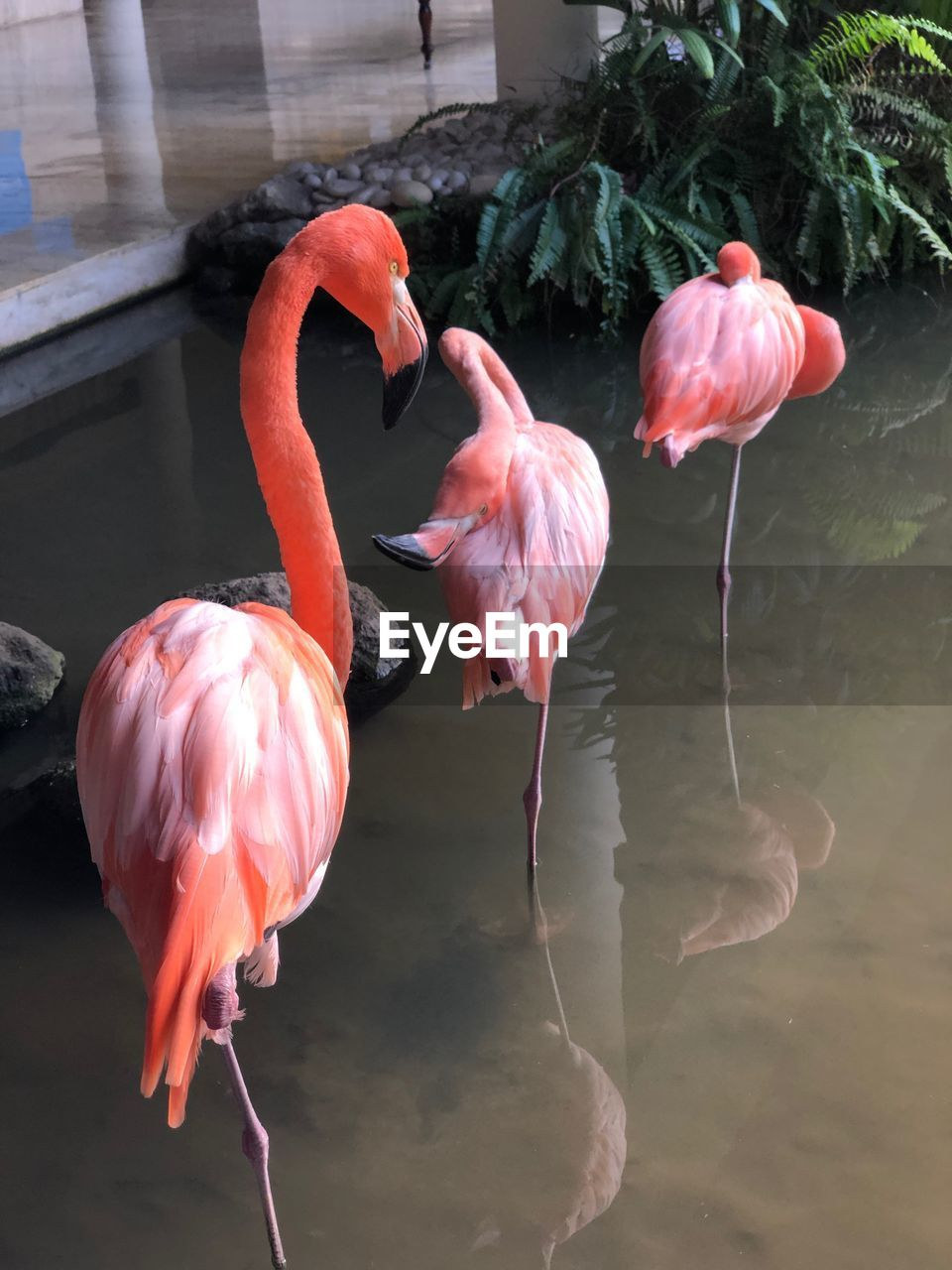 flamingo, bird, animal themes, animal, vertebrate, group of animals, animal wildlife, animals in the wild, pink color, water, lake, no people, day, nature, beauty in nature, orange color, reflection, outdoors, waterfront, animal neck, freshwater bird