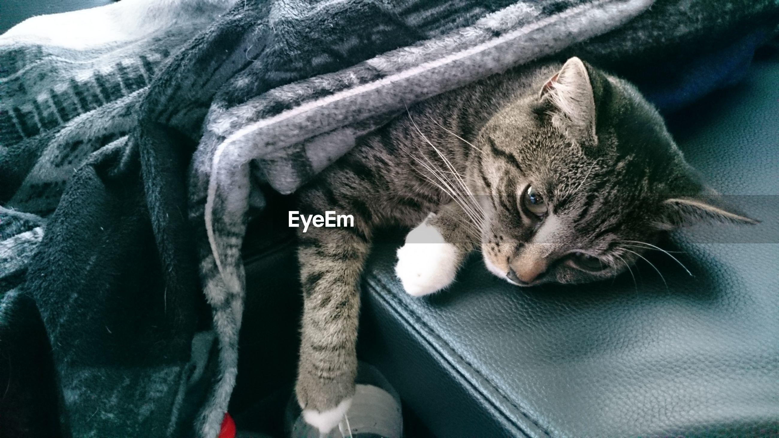 CLOSE-UP OF CAT SITTING ON CARPET
