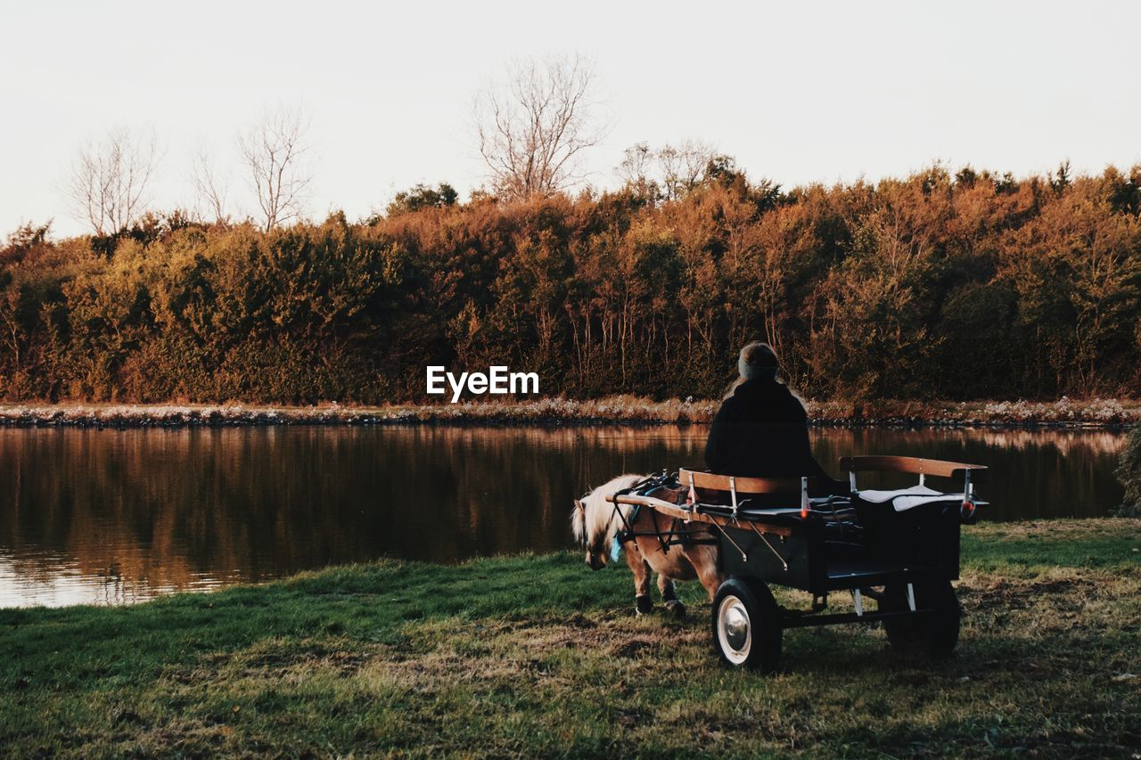 Rear View Of Woman Sitting On Horse Cart By Lake