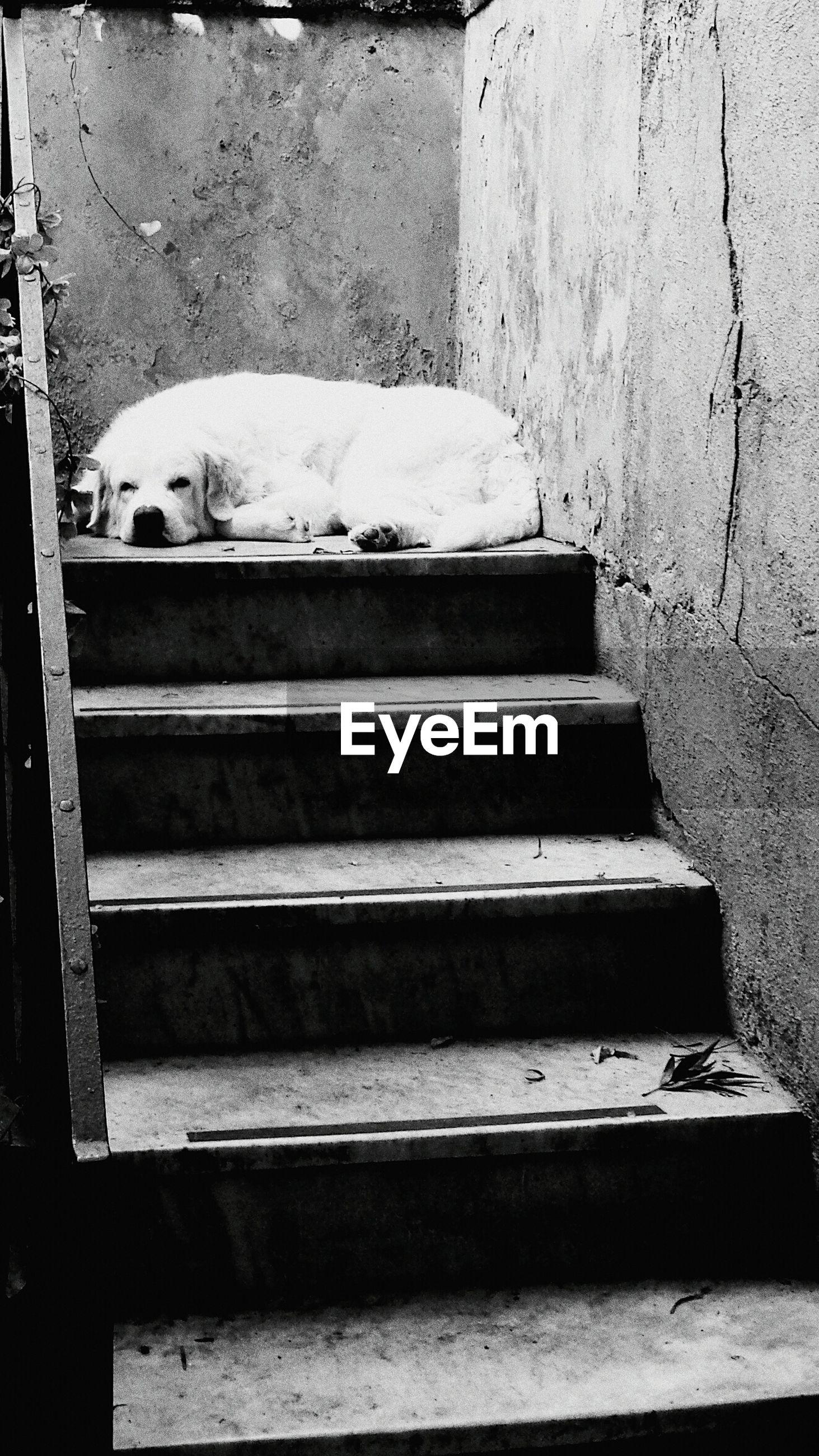 Dog sleeping on steps