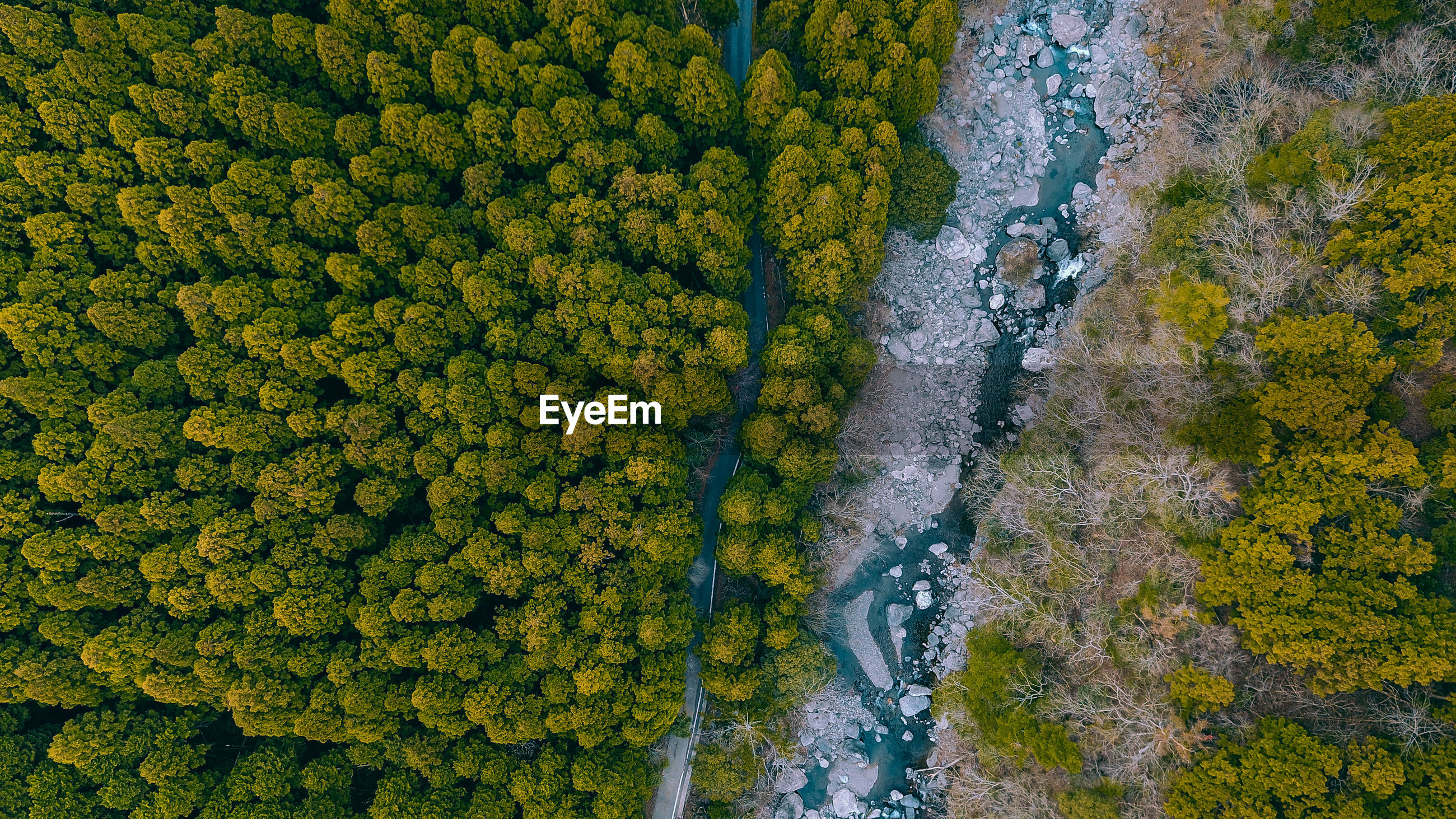 High angle view of river amidst trees in forest