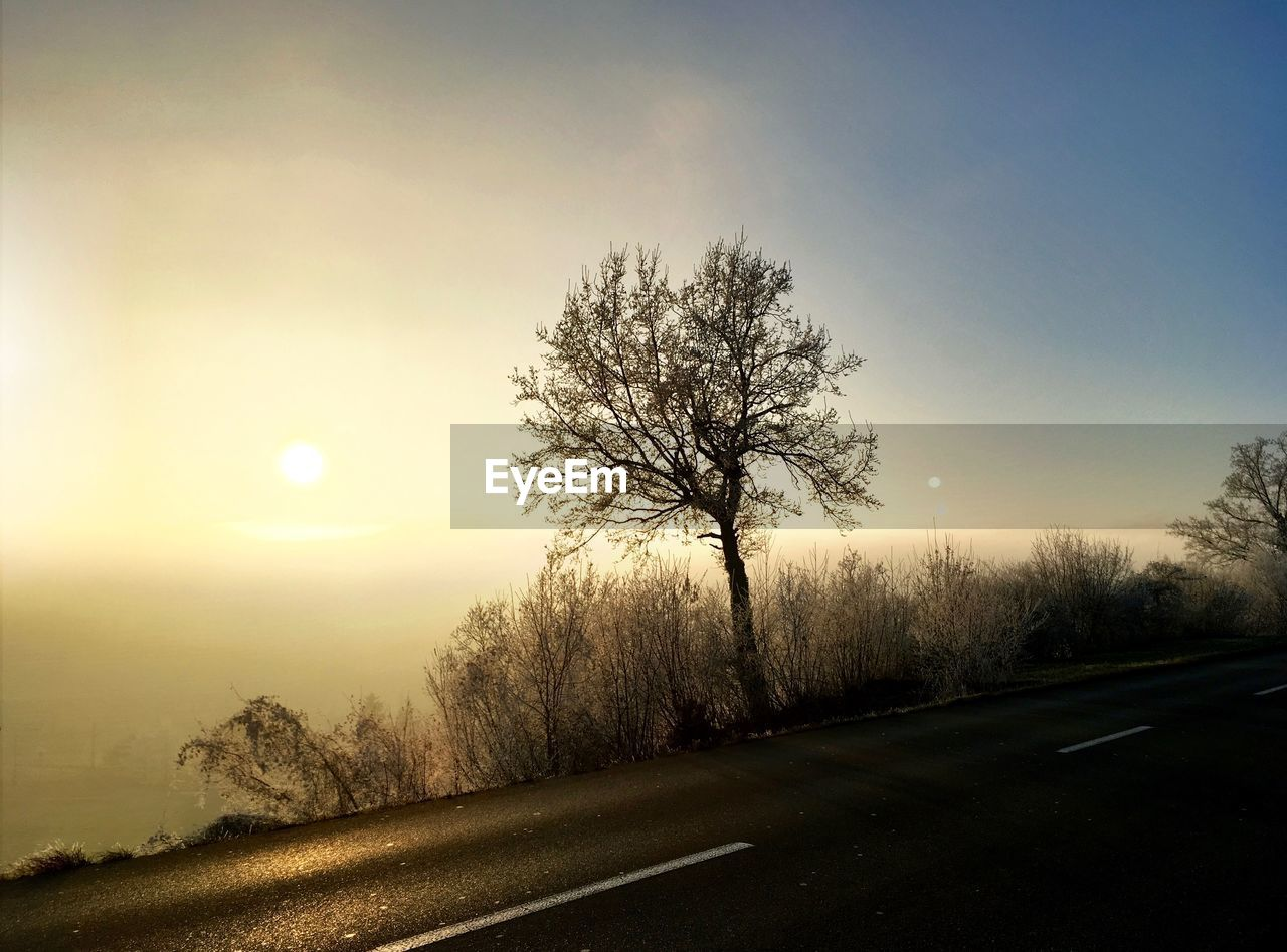sun, road, tree, nature, tranquility, beauty in nature, outdoors, tranquil scene, bare tree, landscape, scenics, the way forward, sky, sunlight, sunset, no people, clear sky, day