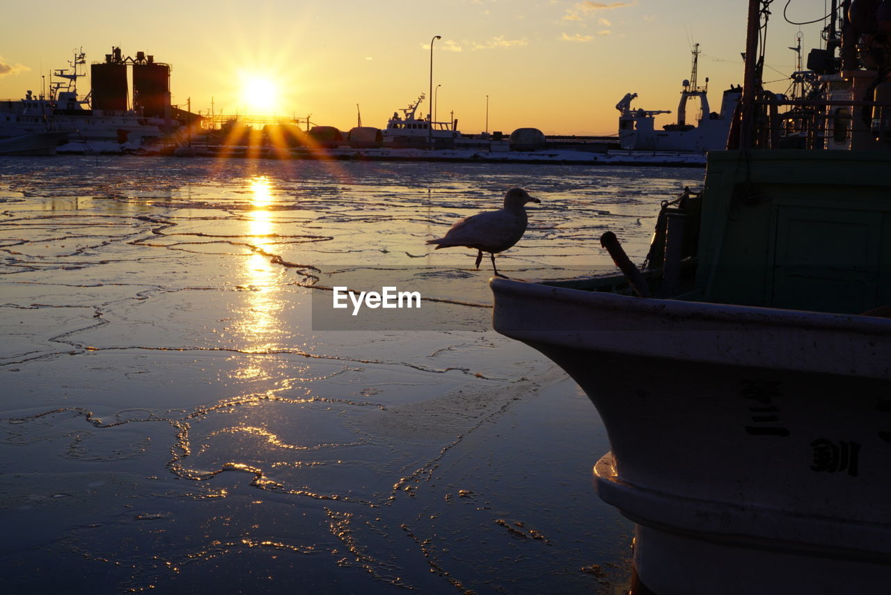 sunset, bird, animal themes, animals in the wild, one animal, water, animal wildlife, sunlight, nautical vessel, nature, sea, sun, seagull, outdoors, silhouette, no people, sky, moored, perching, harbor, architecture, beauty in nature, city, day
