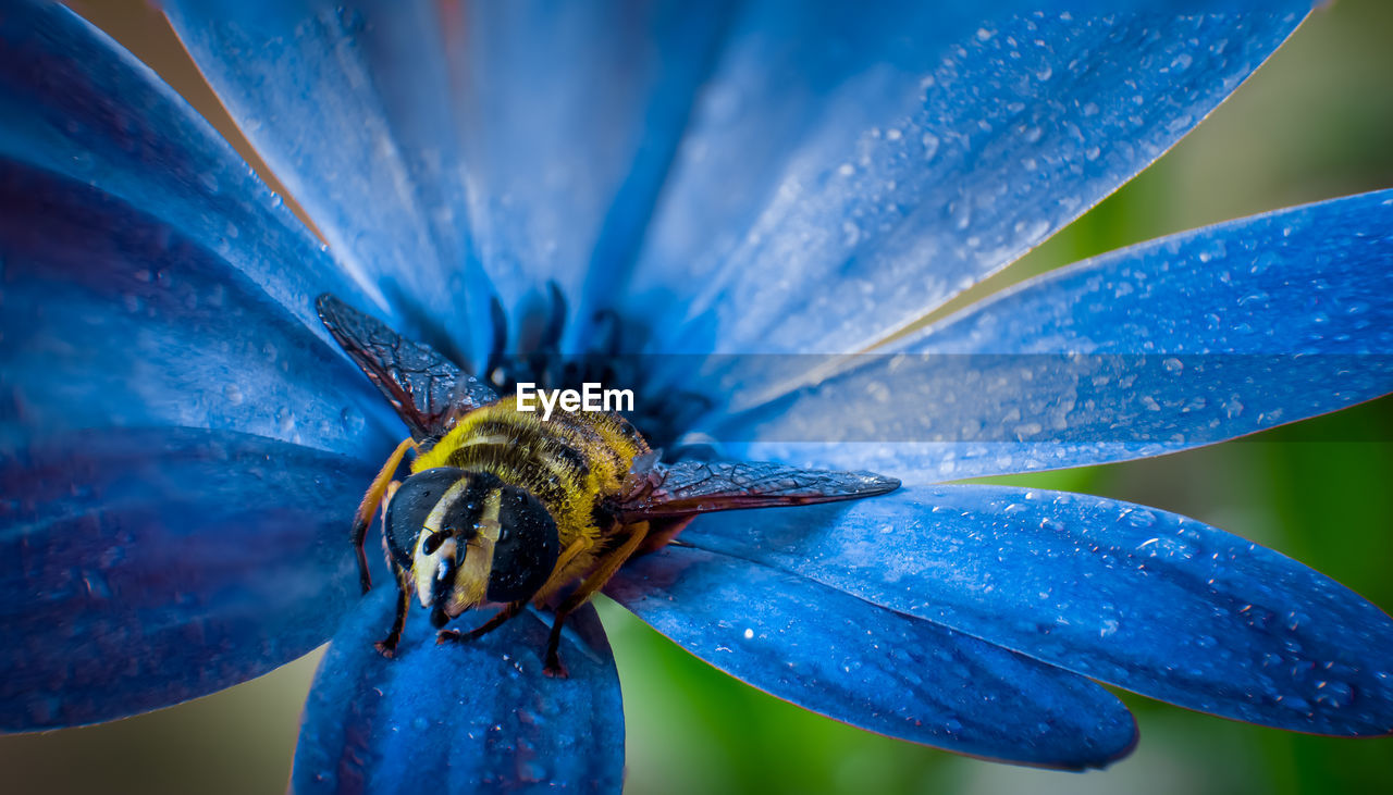 High angle view of wet insect and blue flower