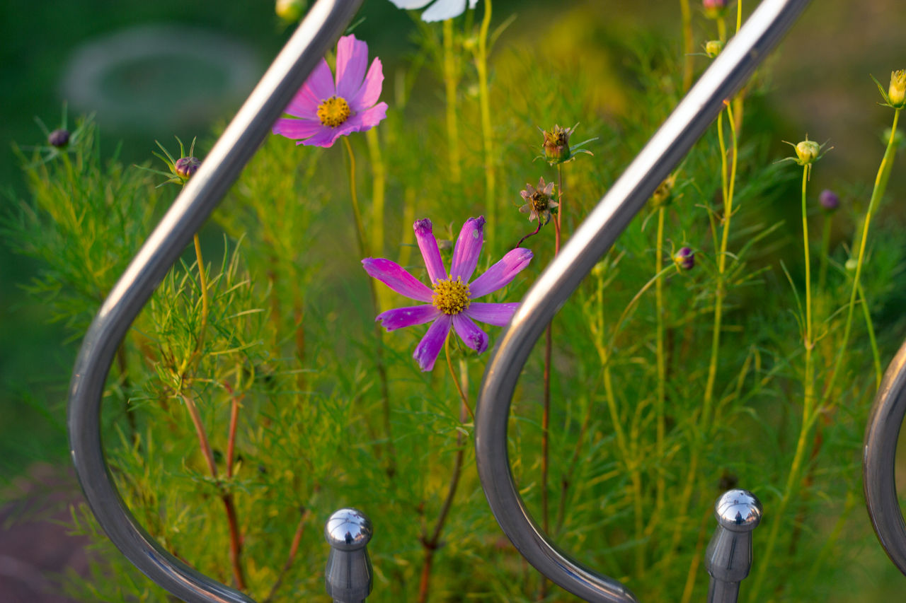 plant, flower, flowering plant, growth, fragility, vulnerability, freshness, beauty in nature, close-up, nature, petal, no people, focus on foreground, day, animals in the wild, animal themes, animal wildlife, invertebrate, animal, flower head, outdoors, purple