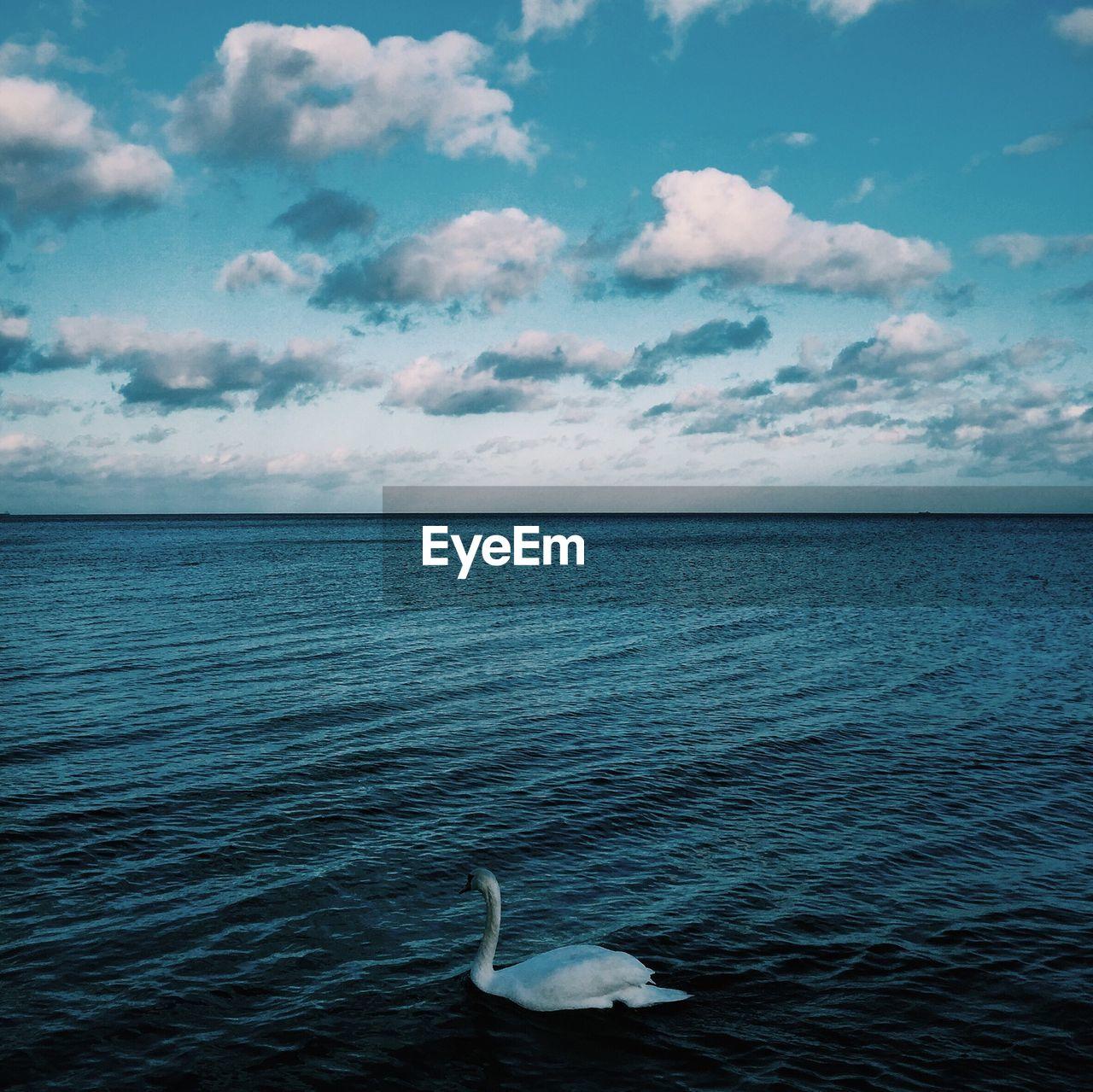 Swan Swimming In Sea Against Sky