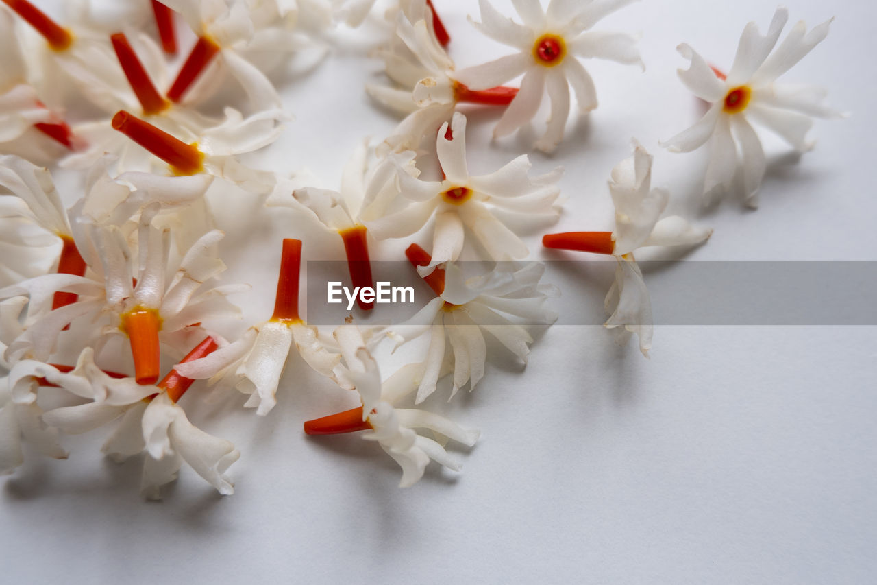 CLOSE-UP HIGH ANGLE VIEW OF WHITE FLOWERS