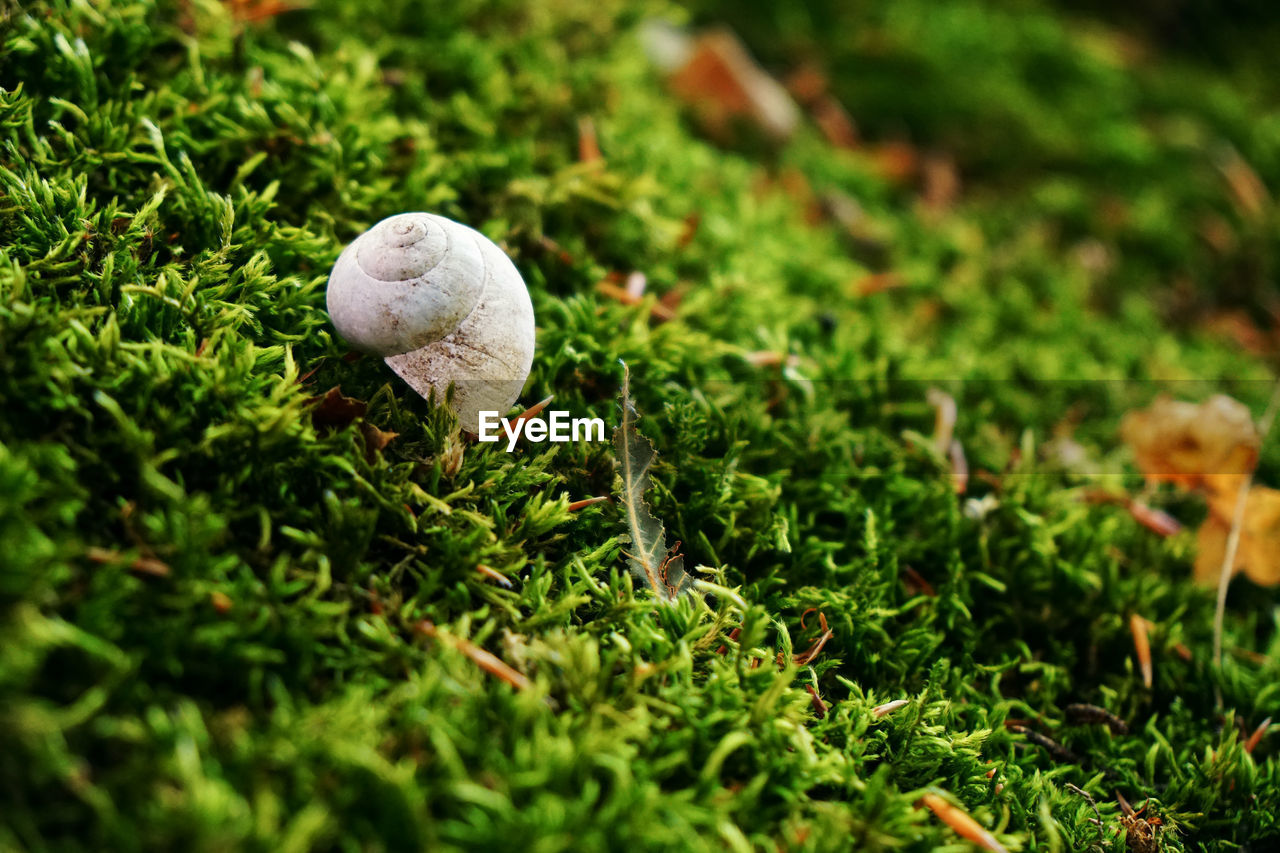 grass, plant, green color, ball, land, selective focus, no people, sport, field, nature, close-up, day, growth, white color, outdoors, baseball - ball, golf, baseball - sport, mushroom, green