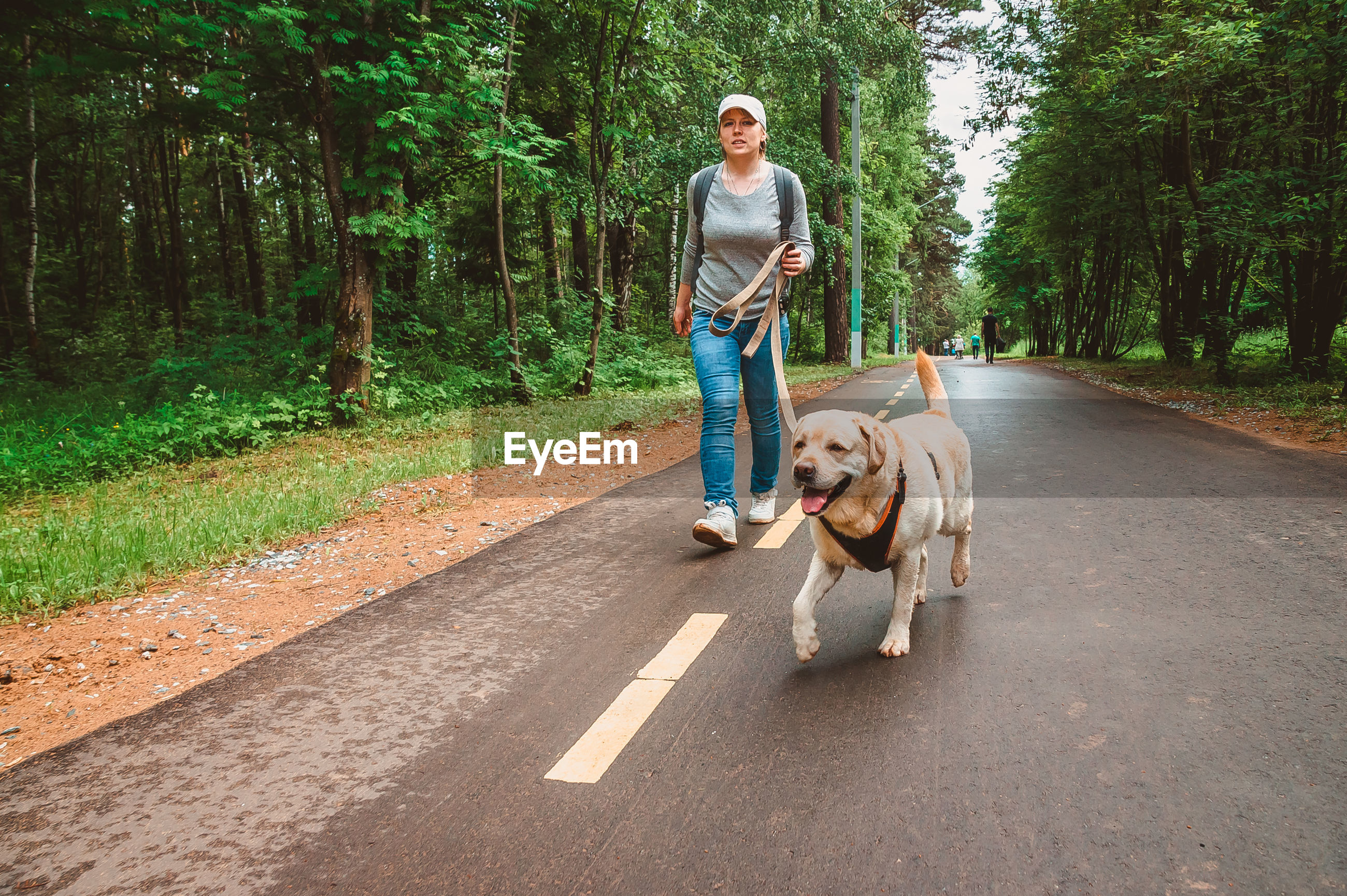 A girl with a dog runs in the park for a walk. sports with a labrador in nature