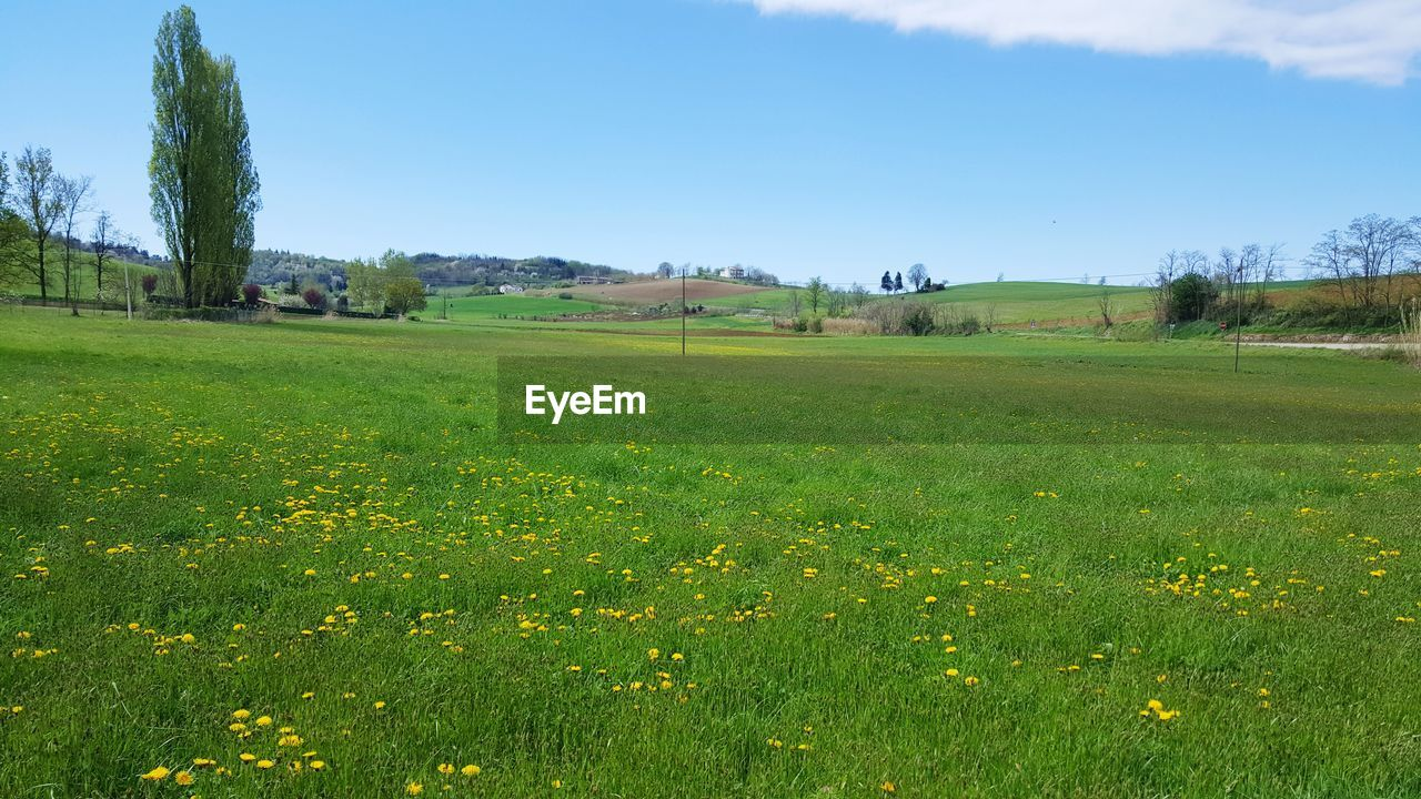 plant, landscape, field, environment, tranquil scene, sky, beauty in nature, land, tranquility, scenics - nature, growth, flower, green color, nature, flowering plant, tree, day, grass, rural scene, no people, outdoors