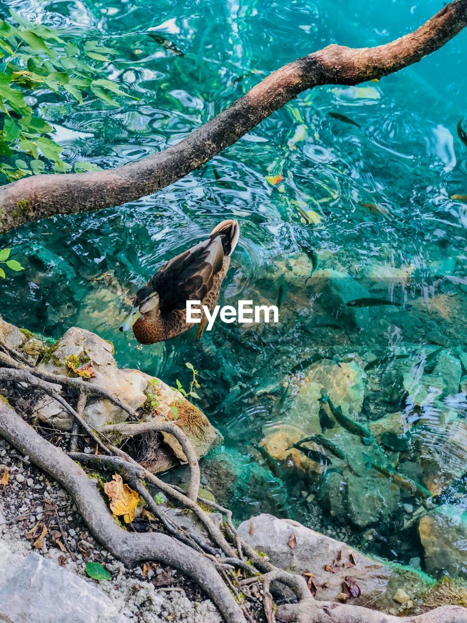 animals in the wild, animal wildlife, animal, water, animal themes, vertebrate, one animal, nature, no people, sea, bird, day, underwater, high angle view, rock, tree, solid, turquoise colored, outdoors, marine