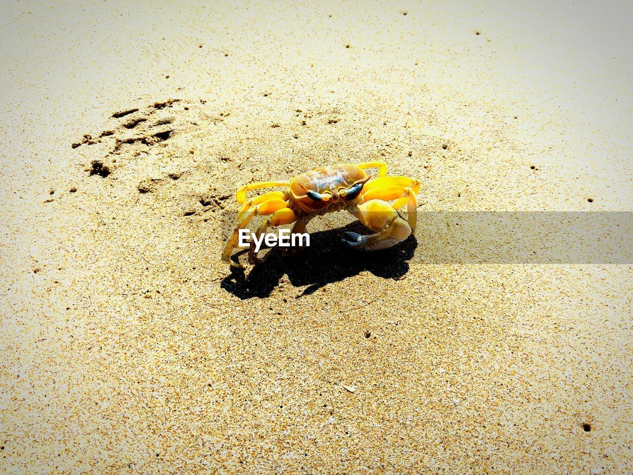 sand, beach, high angle view, animal themes, yellow, nature, no people, day, outdoors, one animal, animals in the wild, sea, sea life, beauty in nature, close-up
