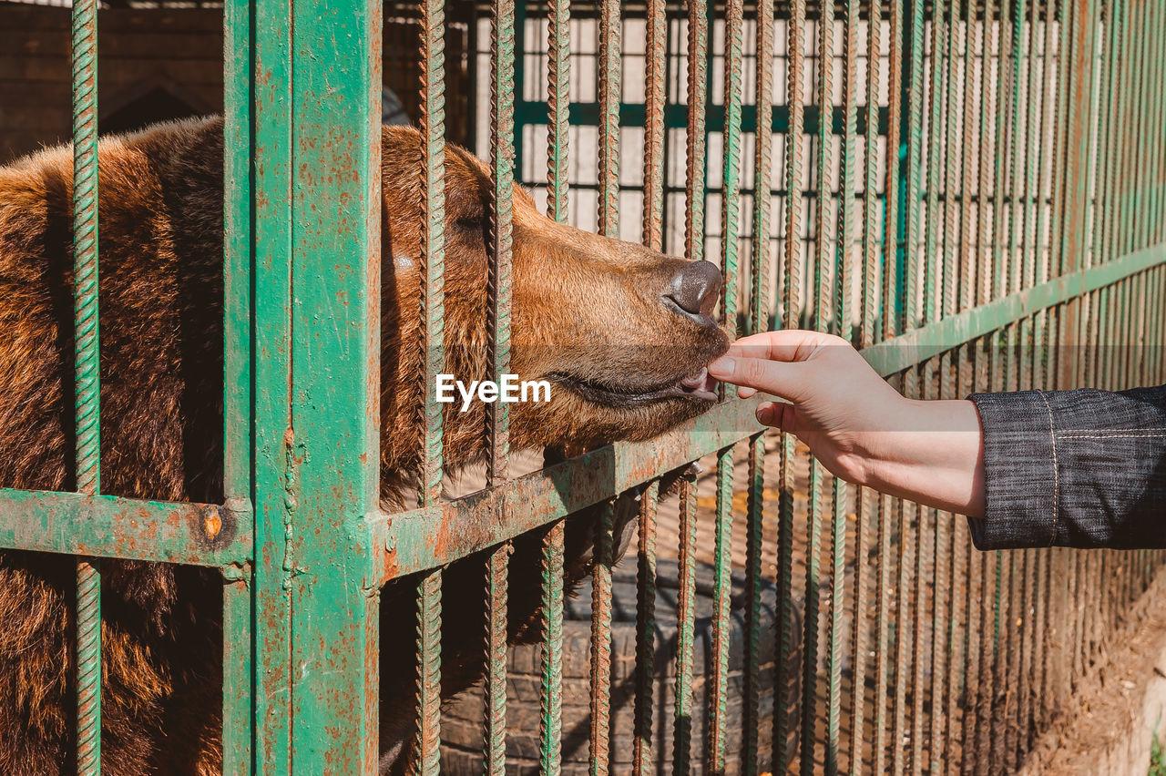 FULL LENGTH OF A HAND FEEDING HORSE