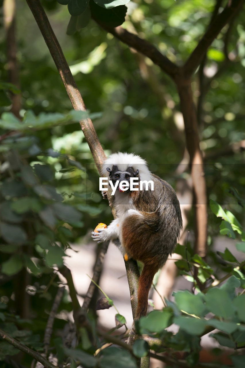 animal themes, animal, one animal, mammal, tree, plant, primate, monkey, animal wildlife, vertebrate, animals in the wild, no people, nature, branch, day, focus on foreground, plant part, leaf, outdoors, forest