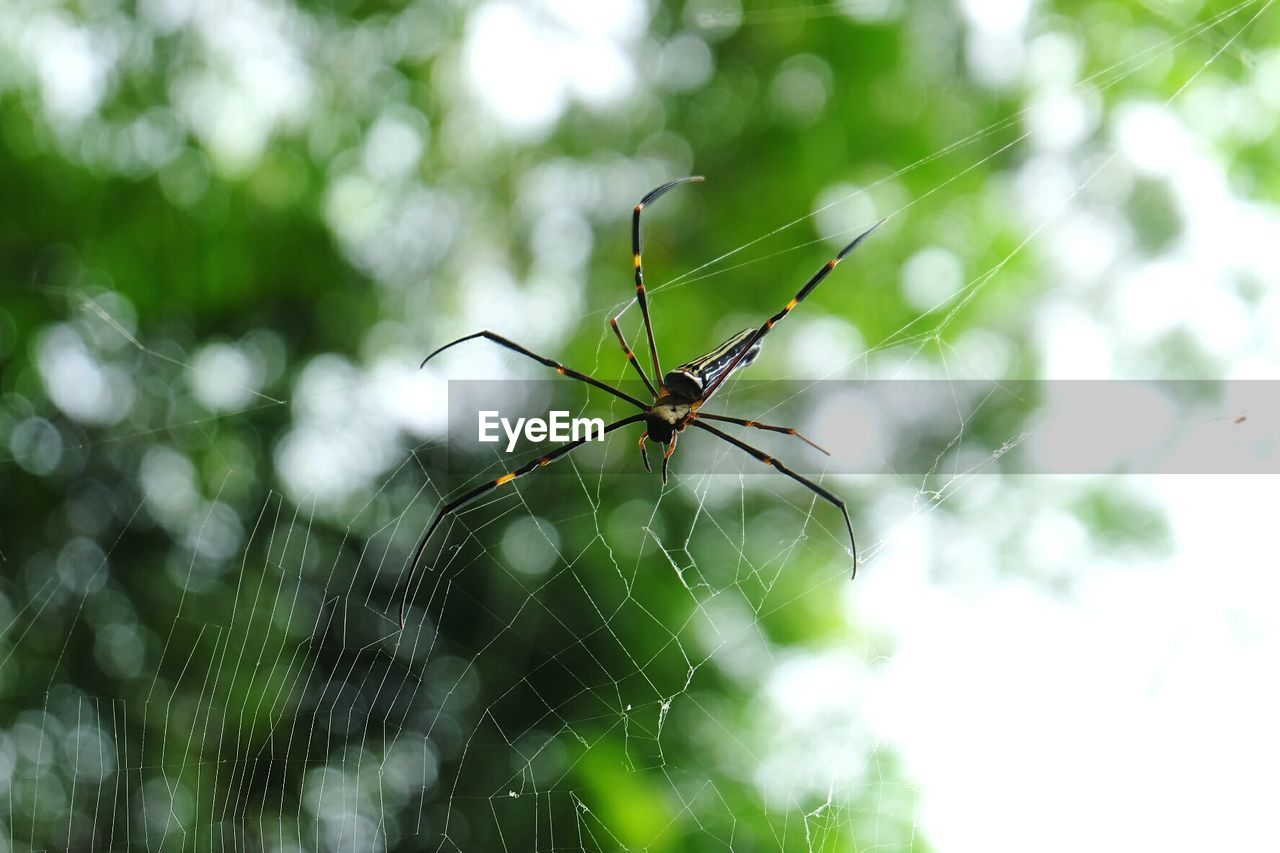 invertebrate, animal, animal themes, animal wildlife, insect, one animal, animals in the wild, spider web, focus on foreground, close-up, fragility, arachnid, spider, arthropod, day, no people, nature, green color, animal body part, animal leg, outdoors, web