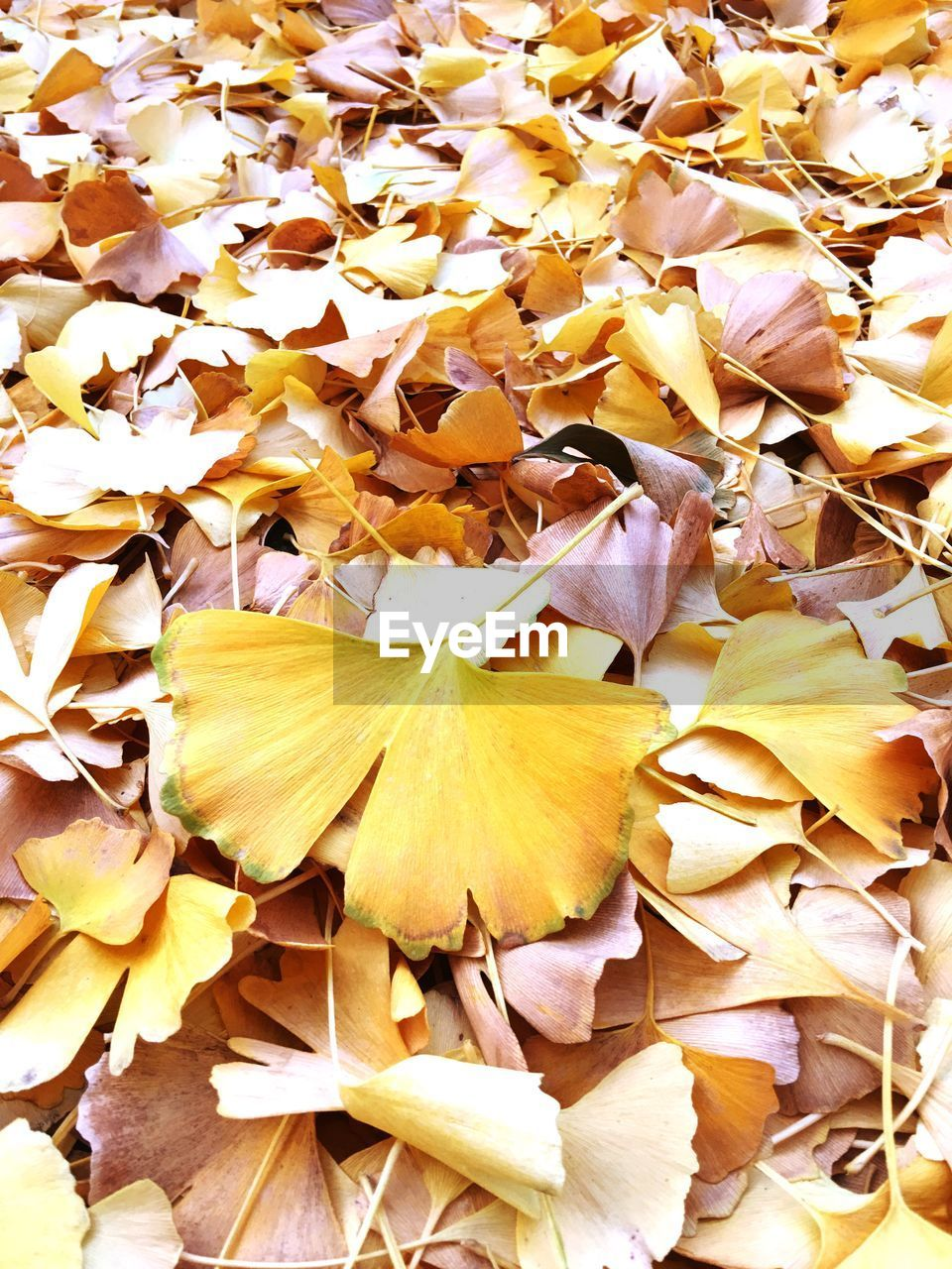 fragility, nature, petal, flower, beauty in nature, autumn, leaf, no people, close-up, backgrounds, outdoors, day, flower head, freshness