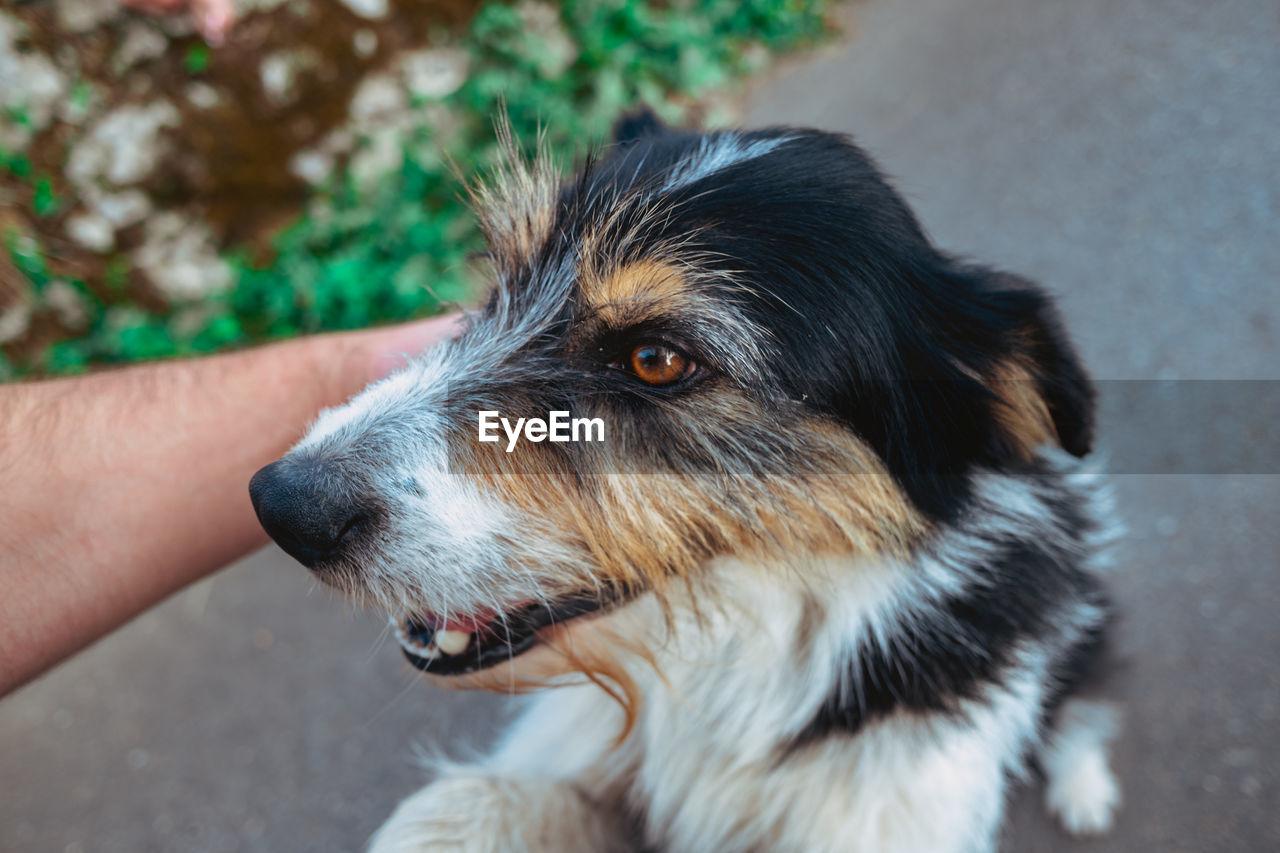 CLOSE-UP OF DOG LOOKING AT CAMERA OUTDOORS