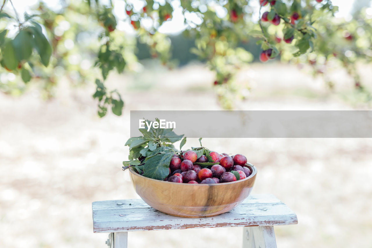 healthy eating, fruit, food, food and drink, freshness, wellbeing, focus on foreground, day, no people, nature, berry fruit, plant, container, agriculture, growth, grape, leaf, outdoors, plant part, large group of objects, ripe