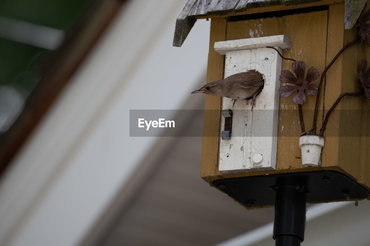 no people, wood - material, metal, focus on foreground, old, day, close-up, rusty, wall - building feature, low angle view, birdhouse, architecture, indoors, selective focus, built structure, hanging, abandoned, house, lighting equipment, electric lamp