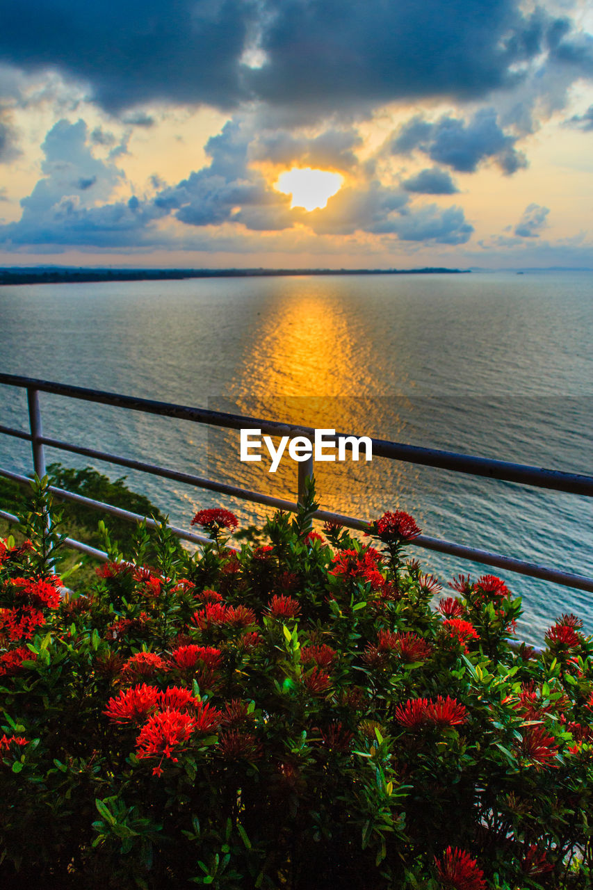 sea, water, beauty in nature, nature, sunset, horizon over water, scenics, tranquil scene, sky, orange color, tranquility, cloud - sky, railing, no people, outdoors, plant, red, flower, tree, day