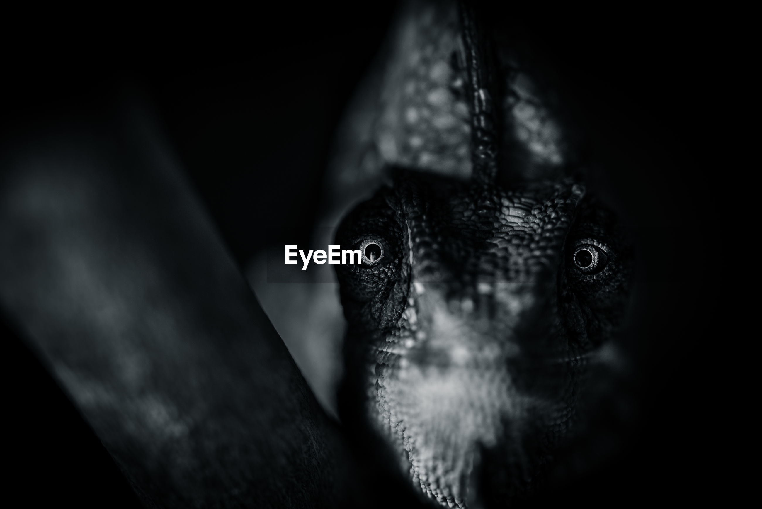 one animal, animal, animal themes, vertebrate, selective focus, animal body part, close-up, animal wildlife, looking at camera, animal head, animals in the wild, portrait, no people, black background, indoors, bird, eye, looking, day, front view, animal eye