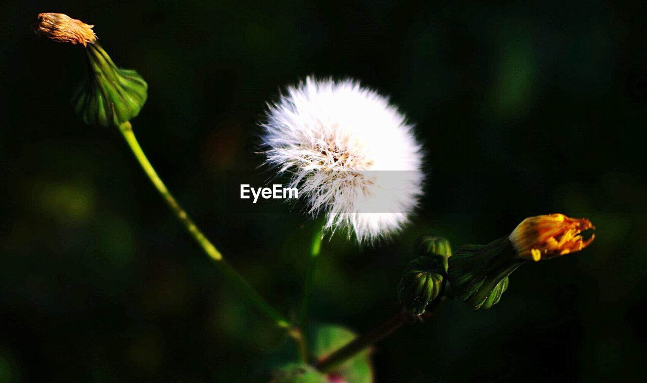 flower, growth, fragility, nature, plant, beauty in nature, flower head, freshness, no people, outdoors, close-up, day