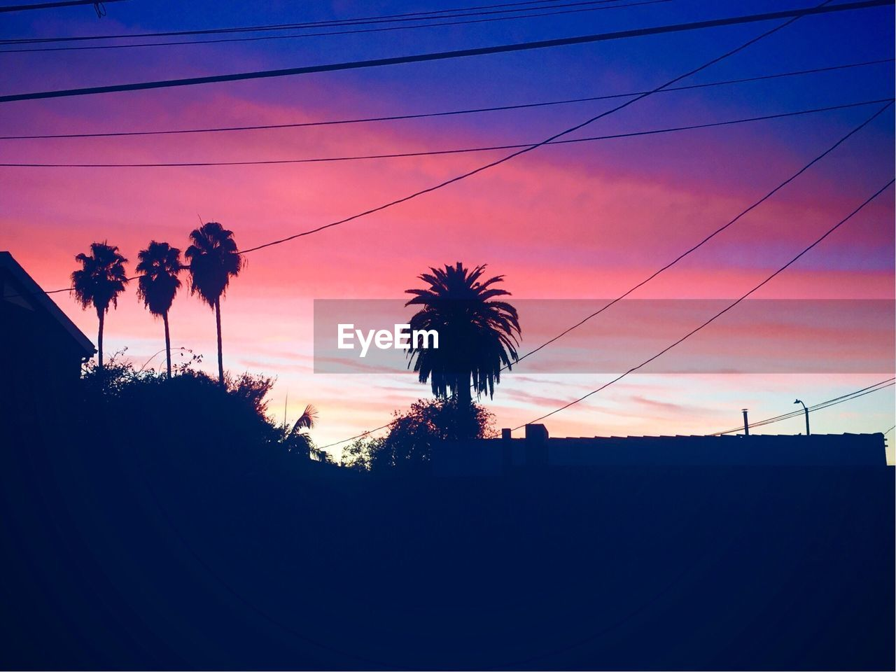 sunset, silhouette, cable, low angle view, sky, tree, palm tree, outdoors, nature, beauty in nature, no people, day