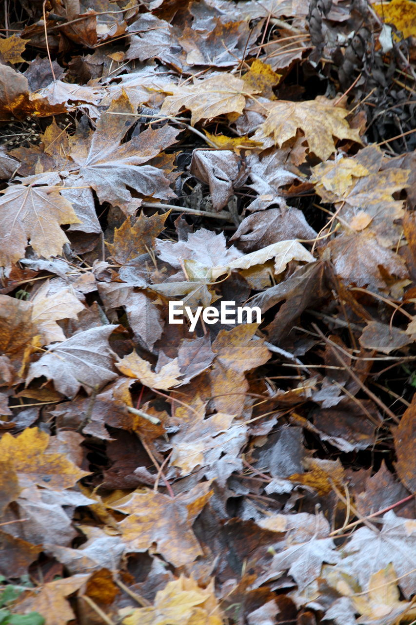 autumn, leaf, change, leaves, dry, nature, fallen, abundance, outdoors, no people, day, maple leaf, backgrounds, fragility, maple, beauty in nature, close-up