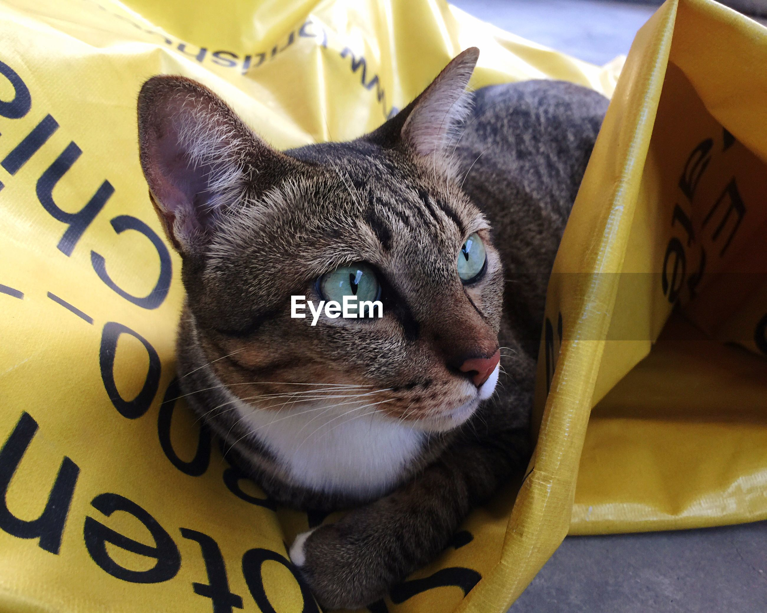 CLOSE-UP PORTRAIT OF CAT LYING ON YELLOW