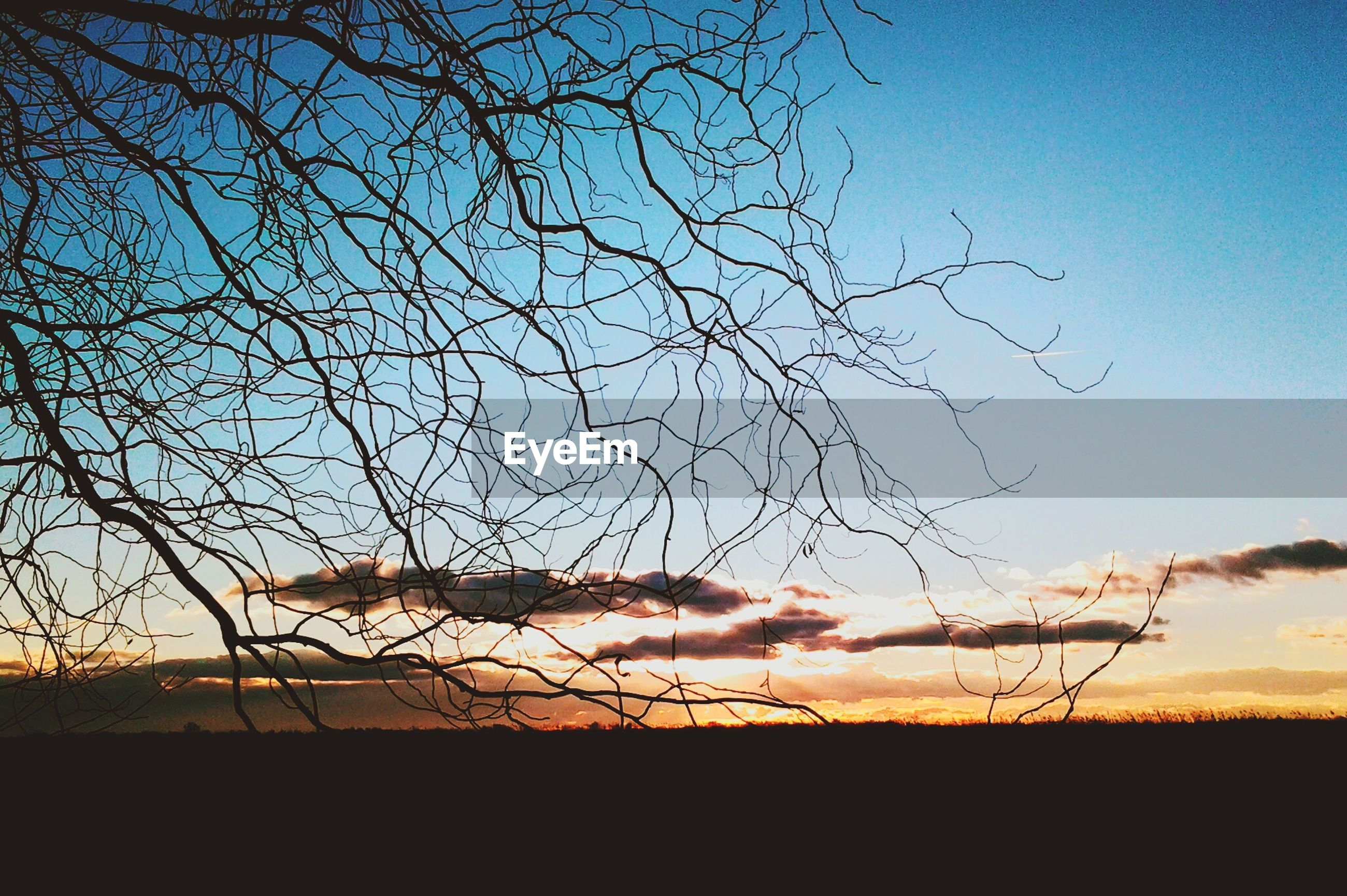 bare tree, sunset, silhouette, landscape, tranquility, field, sky, tranquil scene, scenics, nature, beauty in nature, branch, tree, horizon over land, no people, outdoors, idyllic, orange color, rural scene, non-urban scene