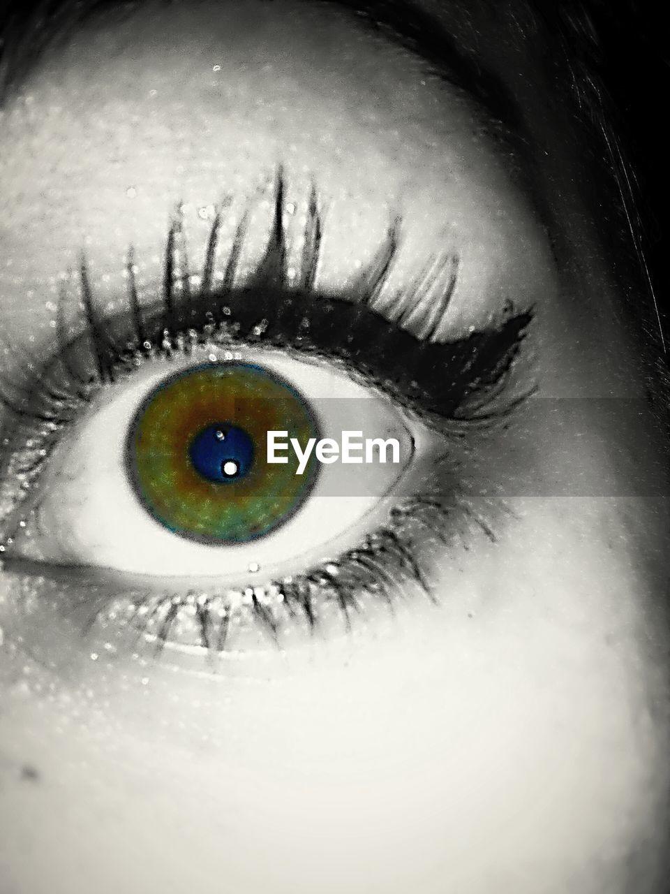 human eye, human body part, real people, one person, eyelash, eyesight, close-up, looking at camera, iris - eye, eyeball, portrait, sensory perception, indoors, day, adult, people