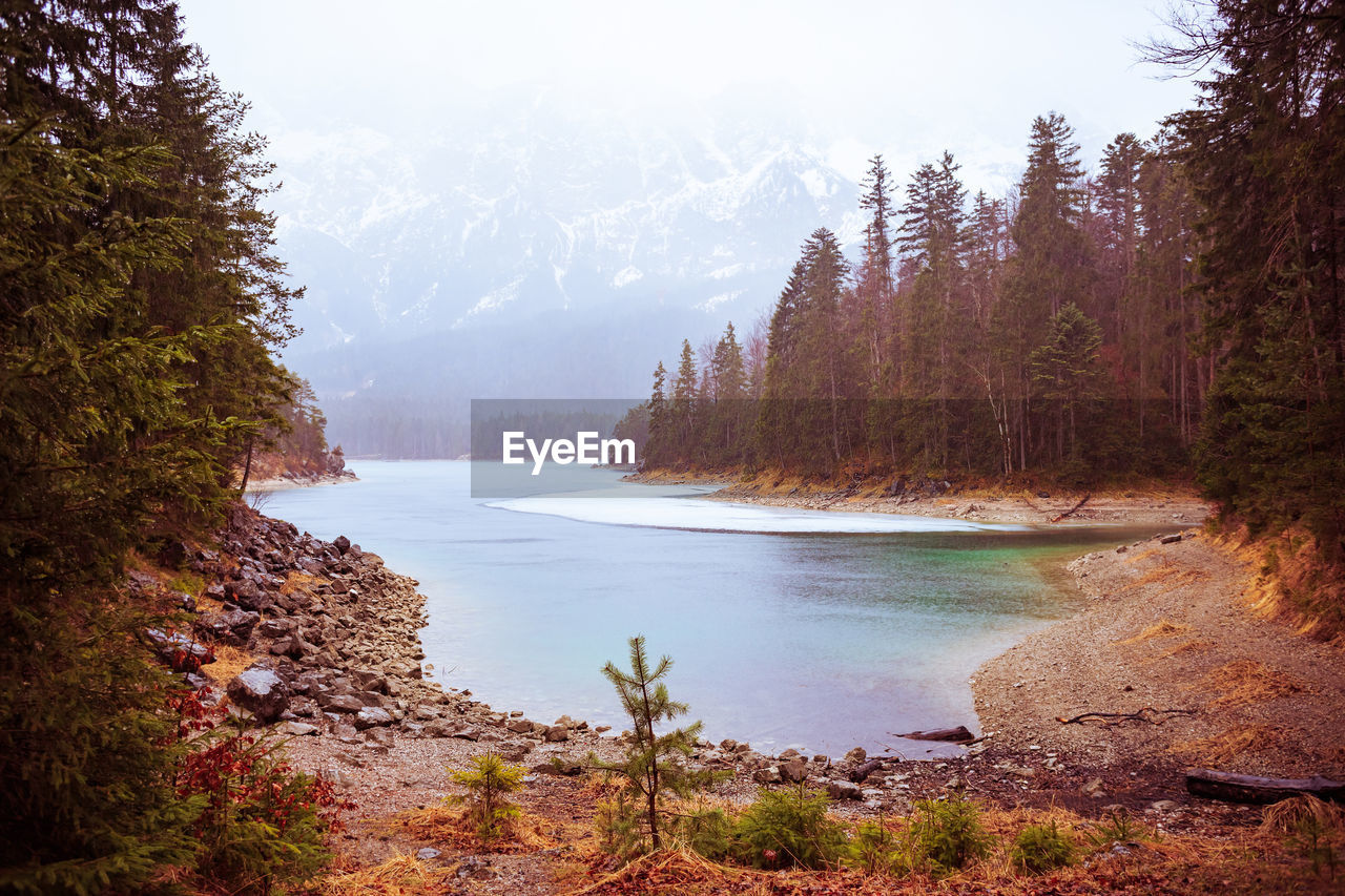 tree, water, plant, beauty in nature, scenics - nature, tranquility, tranquil scene, nature, day, mountain, non-urban scene, land, forest, no people, sky, lake, idyllic, growth, outdoors
