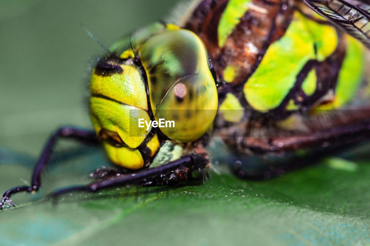 animal, animal themes, insect, invertebrate, animals in the wild, animal wildlife, one animal, close-up, green color, selective focus, nature, no people, plant part, leaf, day, outdoors, plant, zoology, animal body part, animal eye