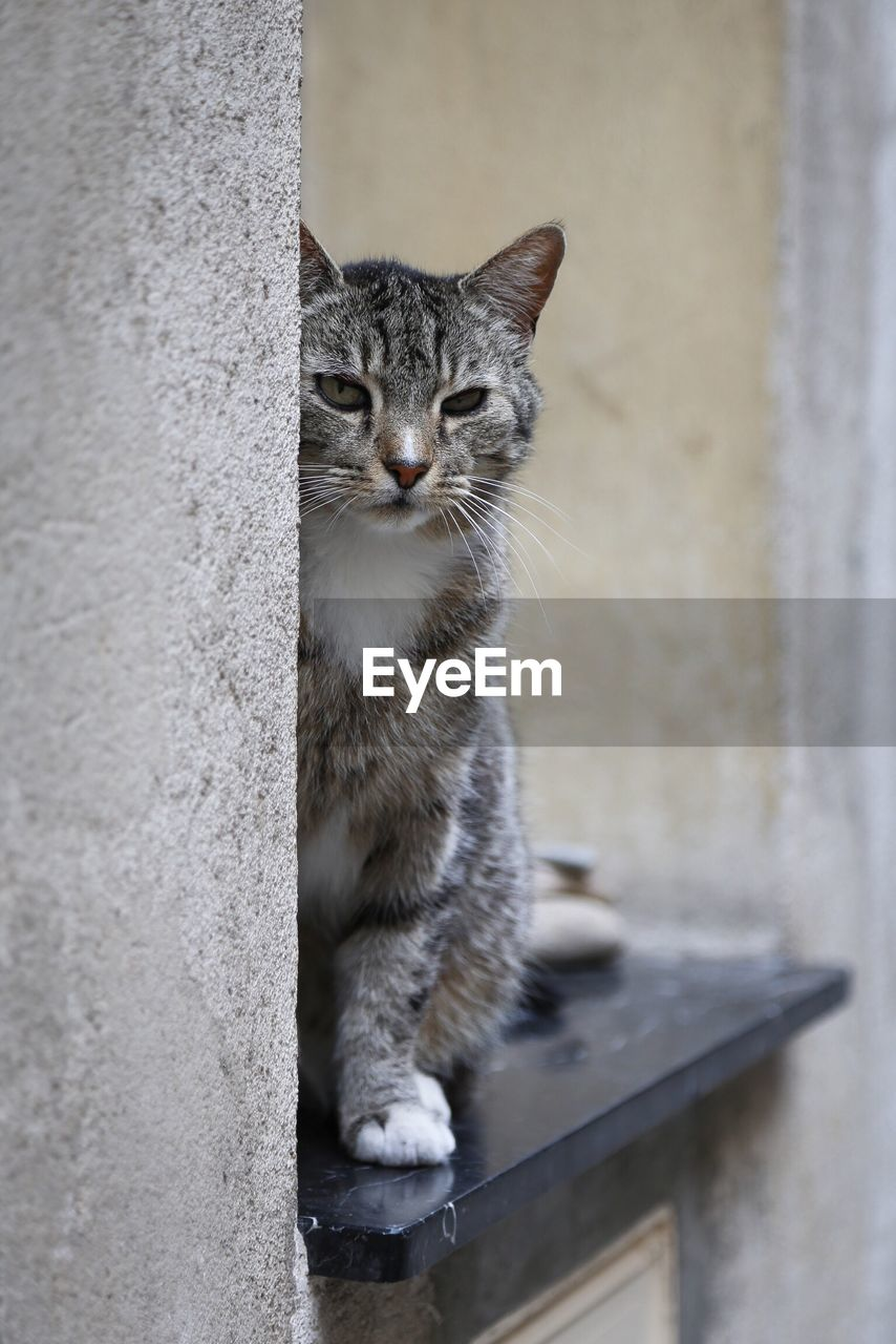 domestic, mammal, domestic cat, feline, pets, cat, domestic animals, one animal, vertebrate, no people, portrait, wall - building feature, whisker, sitting, looking at camera, day, wall, animal eye
