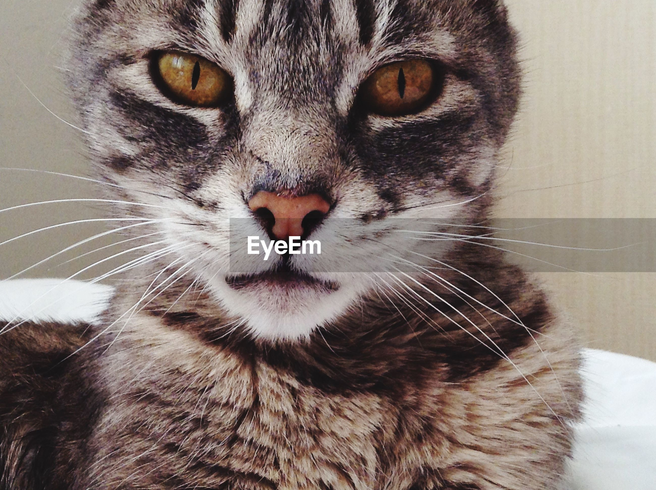 pets, domestic animals, domestic cat, one animal, animal themes, cat, mammal, feline, whisker, portrait, looking at camera, close-up, animal head, indoors, animal eye, animal body part, staring, alertness, front view