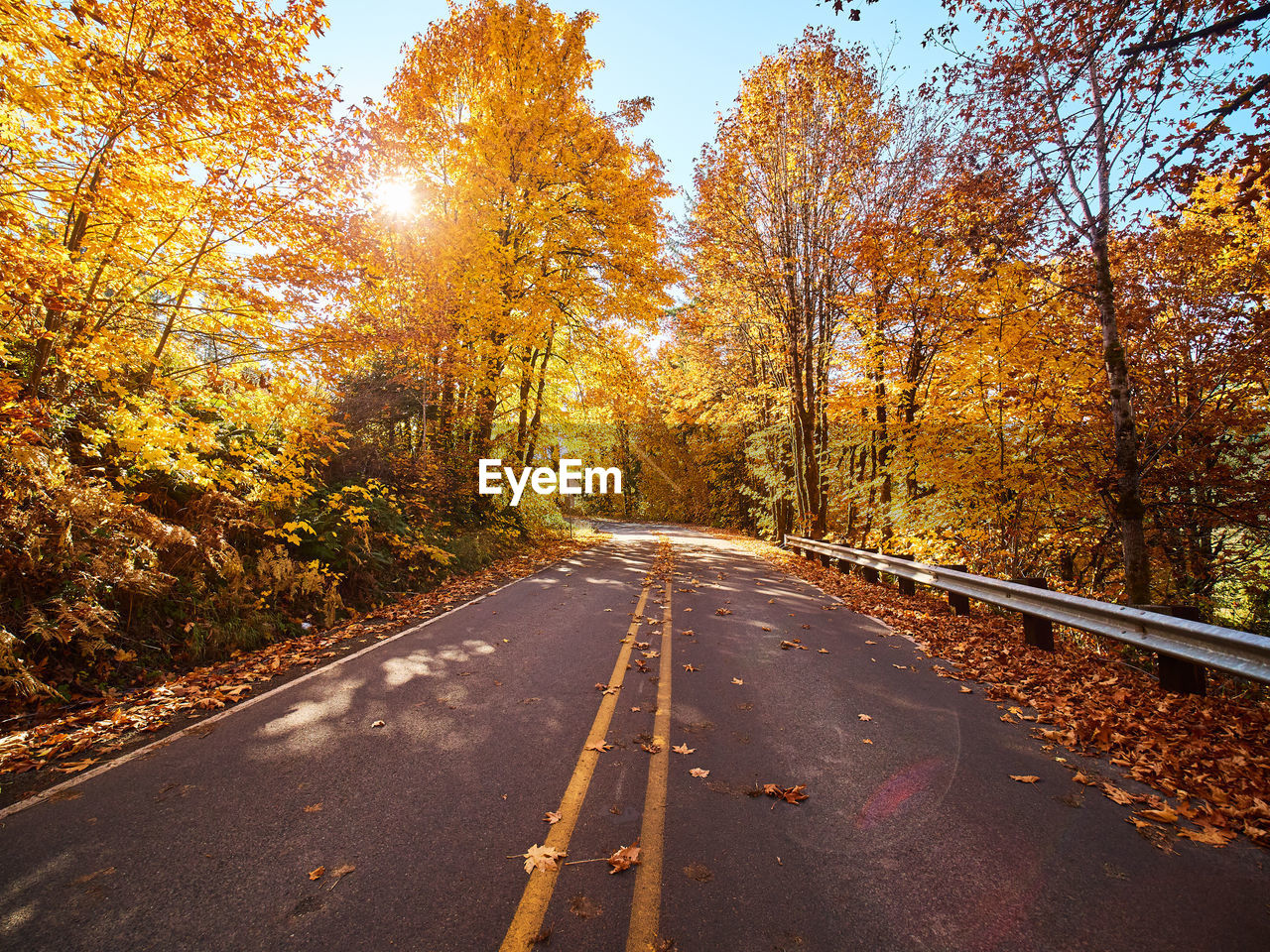 autumn, tree, change, direction, the way forward, plant, road, transportation, nature, no people, day, orange color, leaf, beauty in nature, diminishing perspective, plant part, marking, road marking, tranquility, growth, outdoors, fall, dividing line