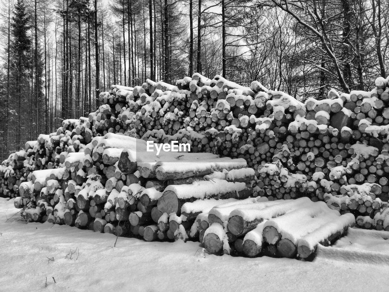 tree, winter, snow, forest, nature, outdoors, cold temperature, day, large group of objects, no people, beauty in nature