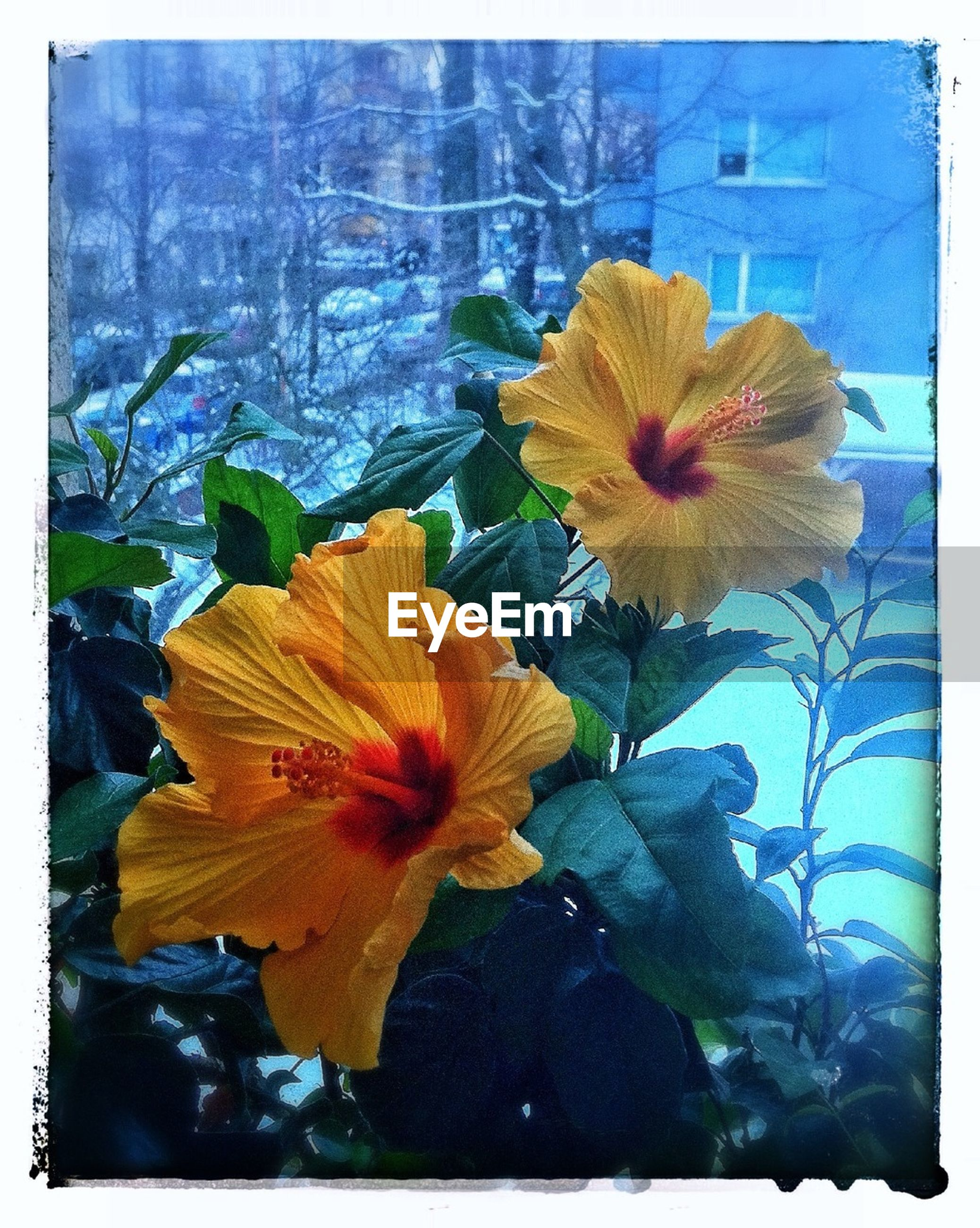 transfer print, flower, fragility, auto post production filter, petal, flower head, freshness, beauty in nature, growth, yellow, nature, leaf, close-up, plant, blooming, orange color, season, in bloom, single flower, botany