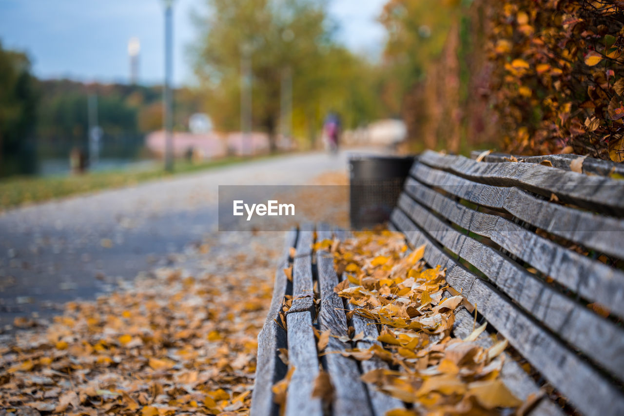 autumn, change, plant part, leaf, the way forward, direction, nature, day, tree, falling, focus on foreground, selective focus, leaves, plant, incidental people, footpath, outdoors, dry, orange color, park, autumn collection, diminishing perspective, fall, surface level, park bench