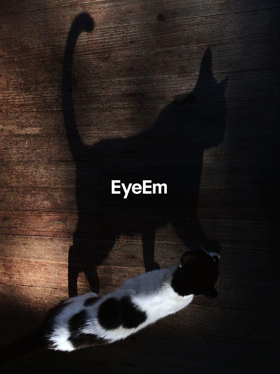 Shadow of cat on hardwood floor