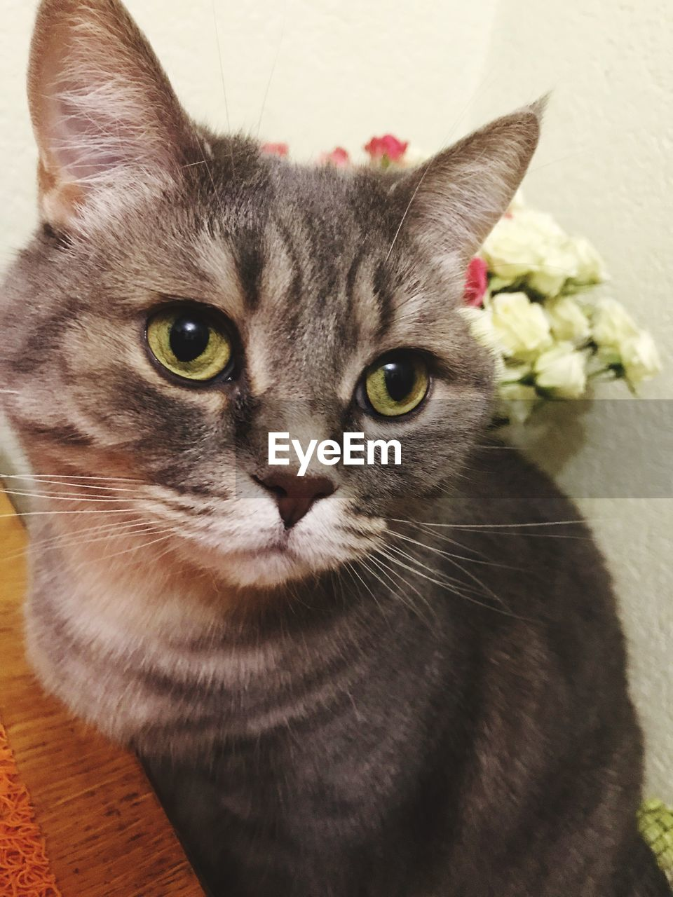 cat, domestic cat, domestic, feline, pets, domestic animals, mammal, animal, animal themes, one animal, vertebrate, portrait, looking at camera, no people, close-up, whisker, indoors, flowering plant, flower, high angle view, animal head, animal eye